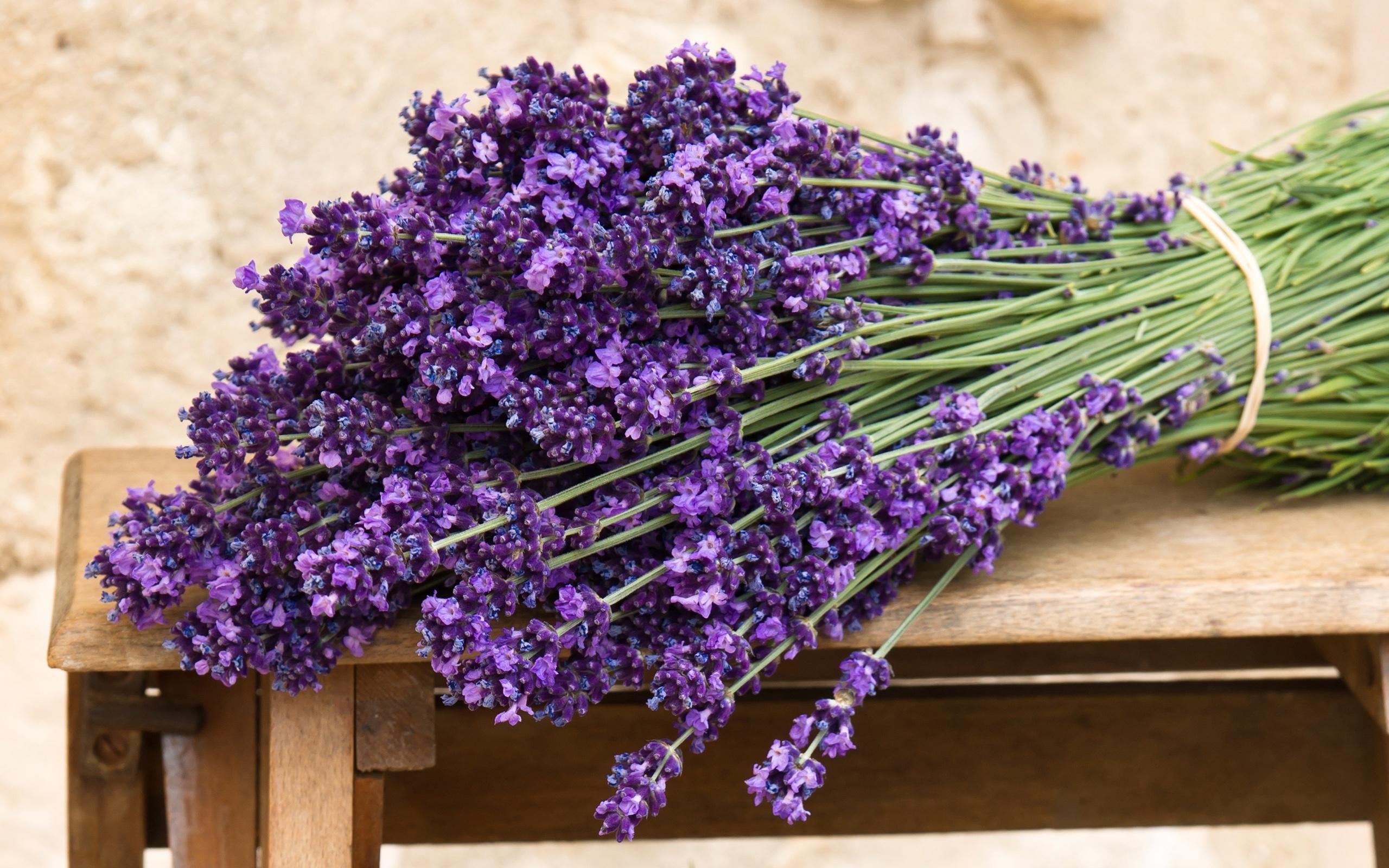 Download 300+ Wallpaper Bunga Lavender HD Paling Baru