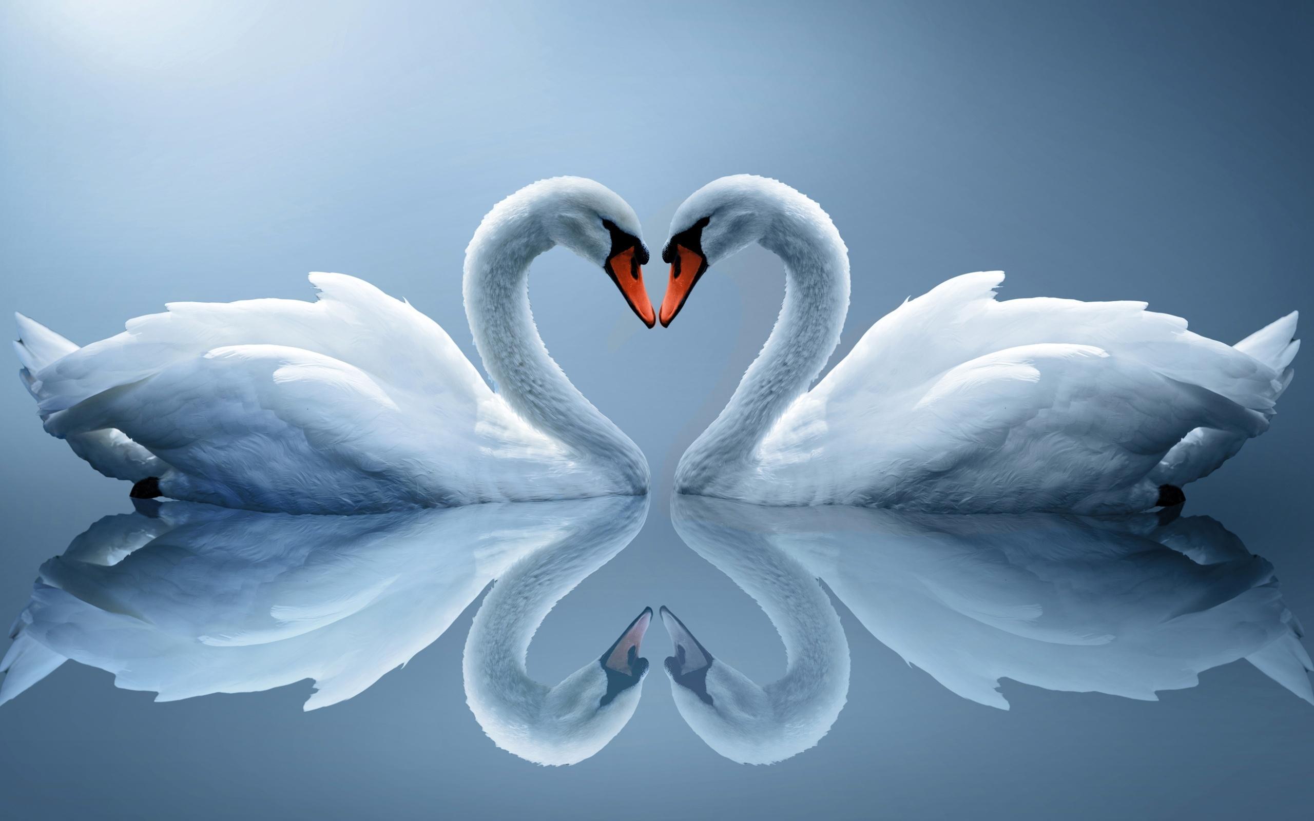 любовь сердце белое  № 1590496 бесплатно