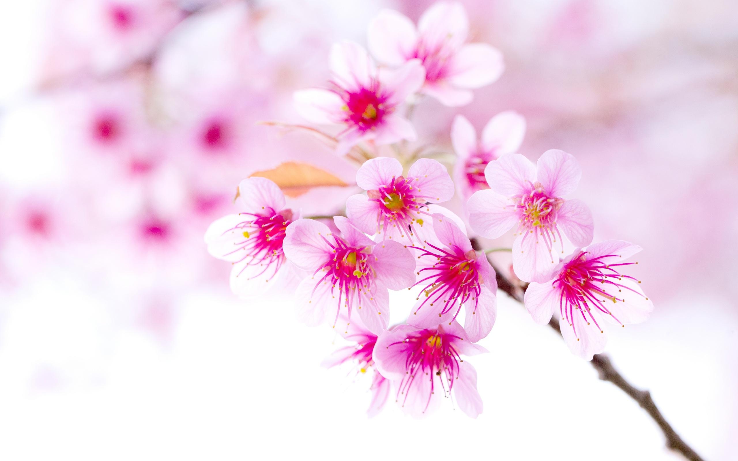 ... rosa Blumen close-up ...