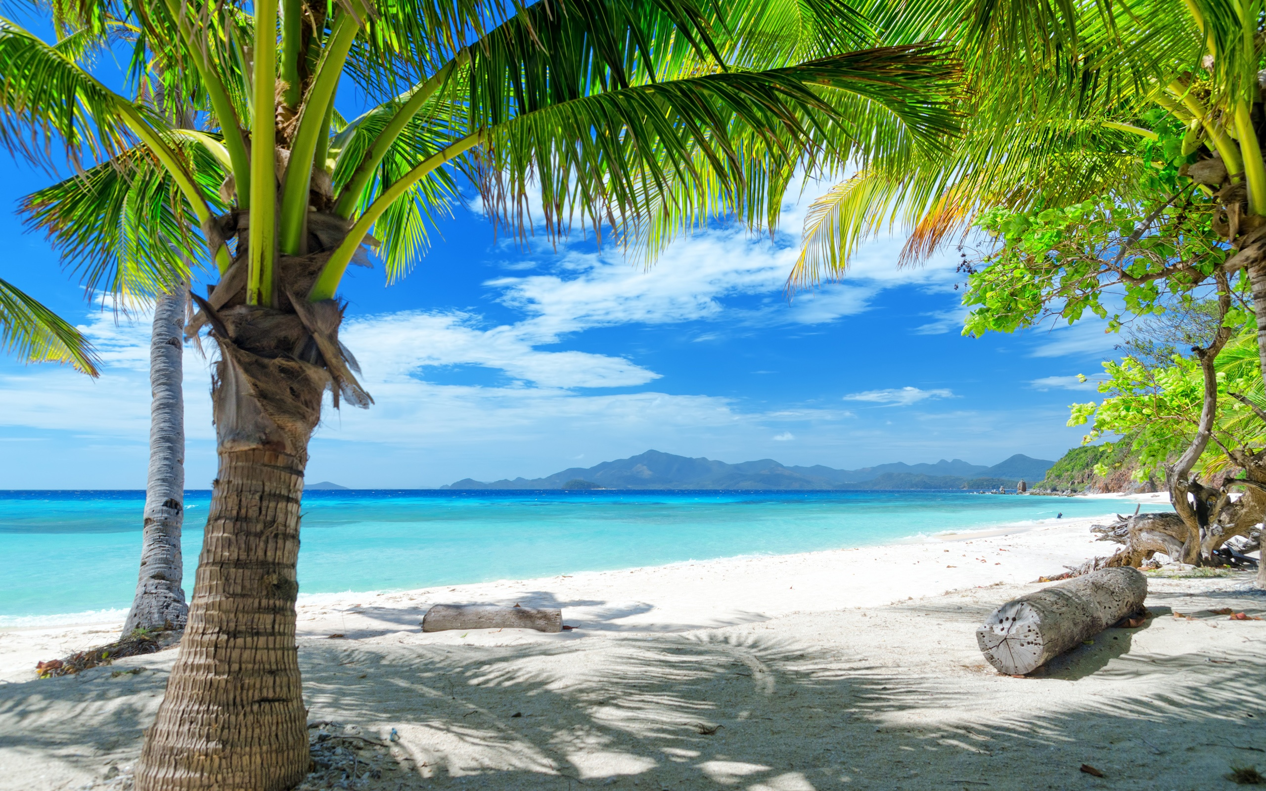 Hintergrundbild strand palmen