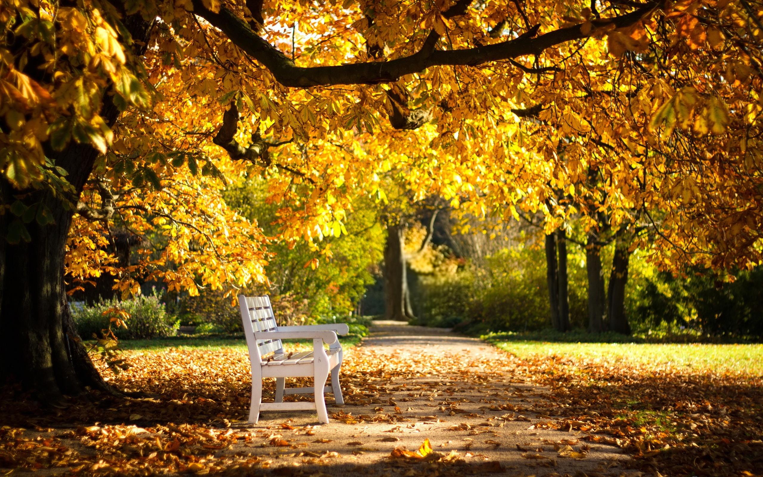 Осень лес парк фонарь листья загрузить