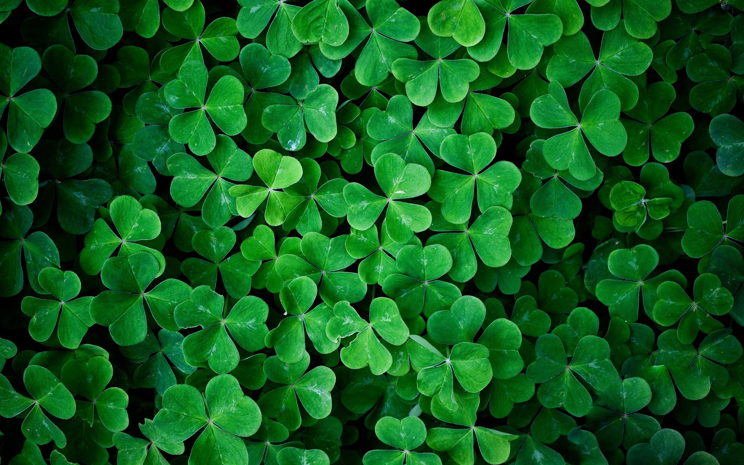 дополнение зеленые картинки для твиттера считаете вы