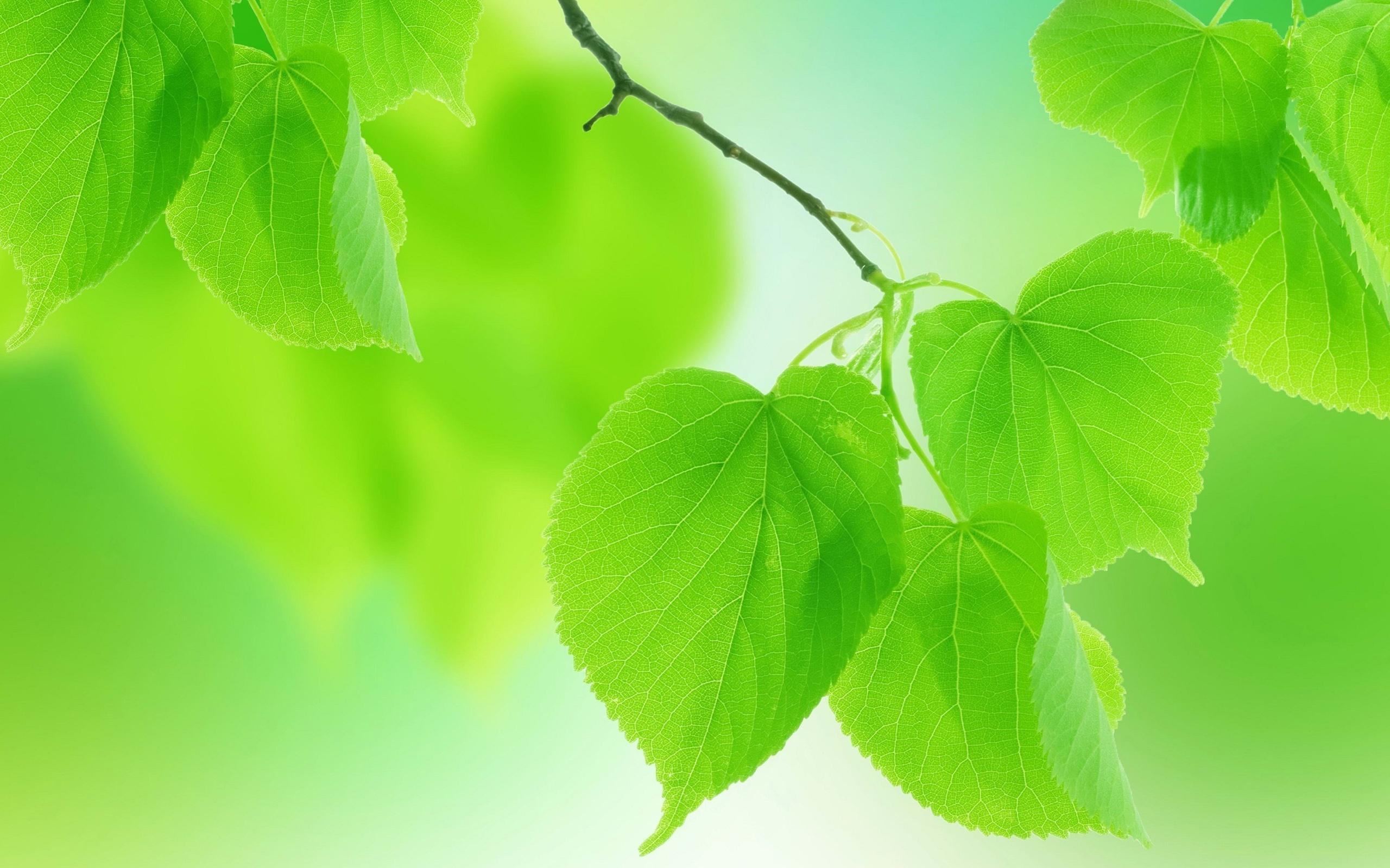 Vert d'été l...