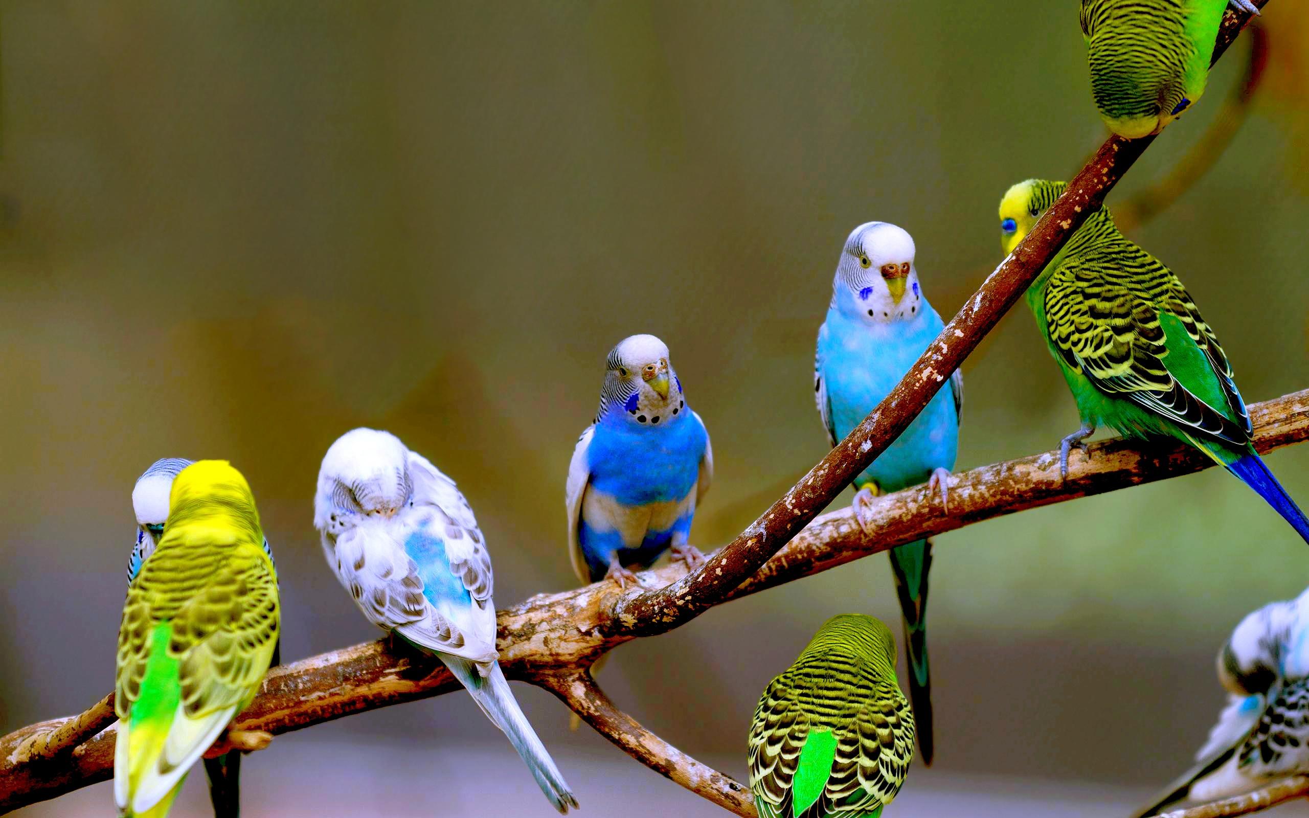 попугай макро деревья  № 737606 бесплатно