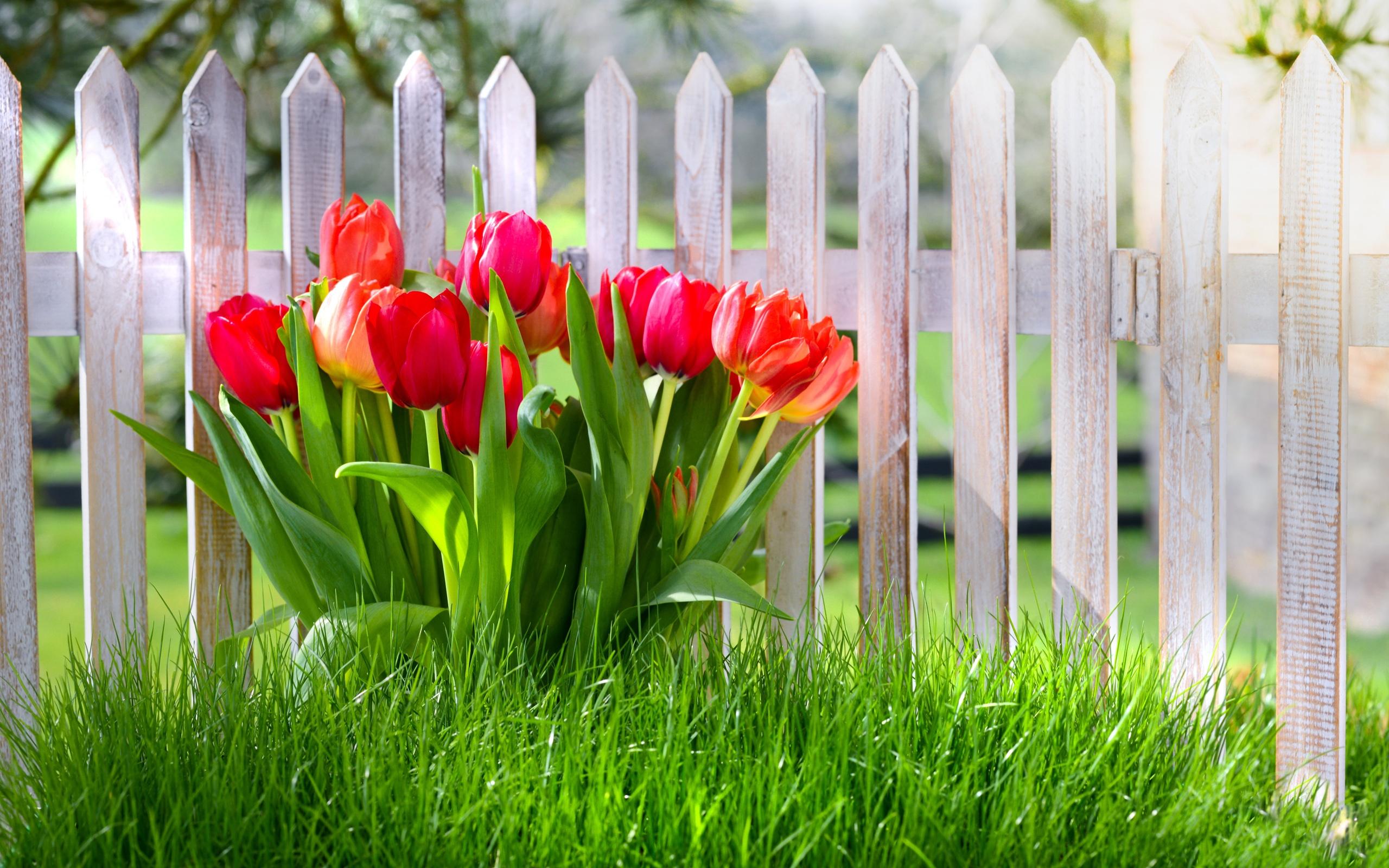 Забор цветы  № 2488861  скачать