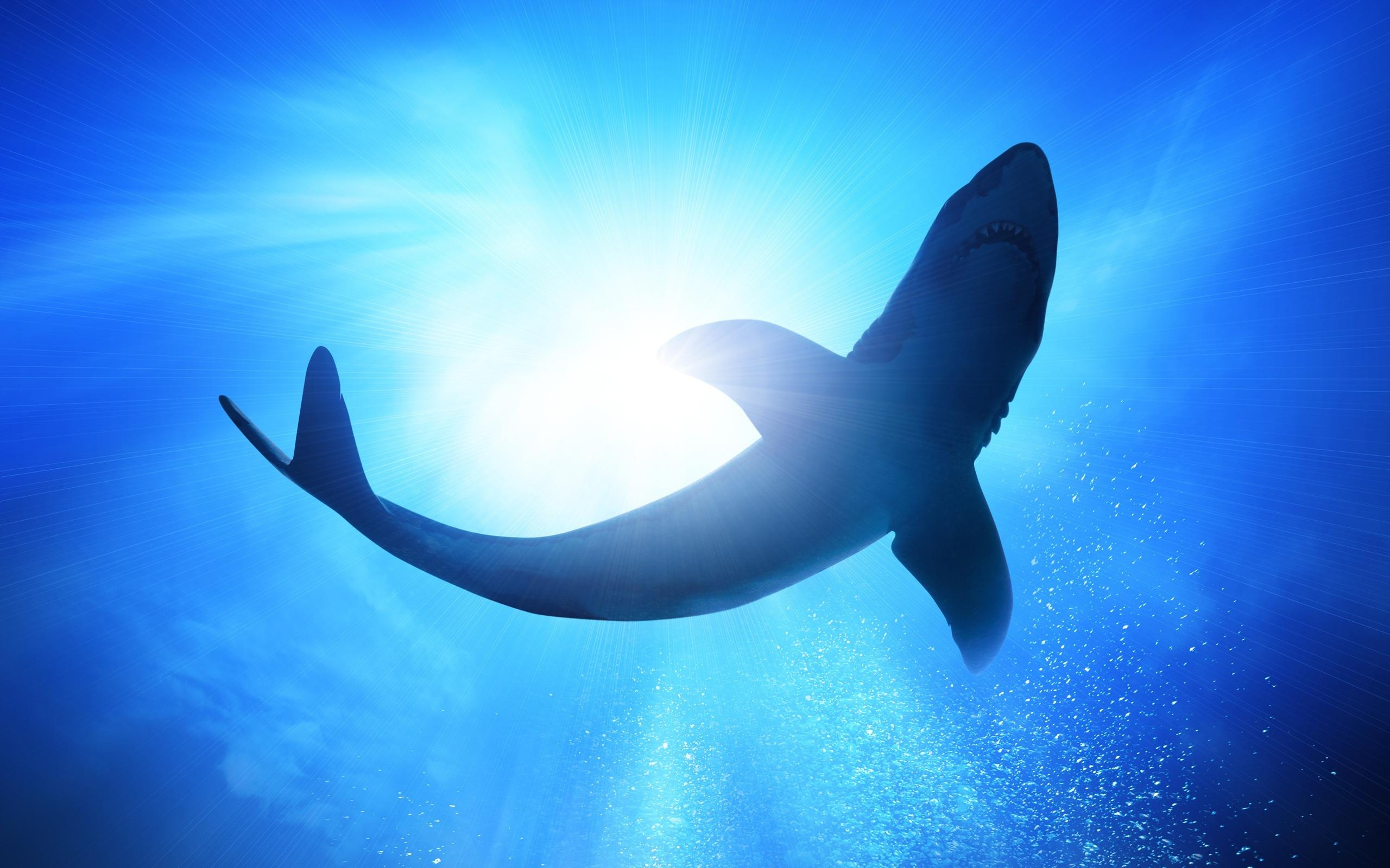 壁紙 水中 青い海 泡 サメ 2560x1600 Hd 無料のデスクトップの背景