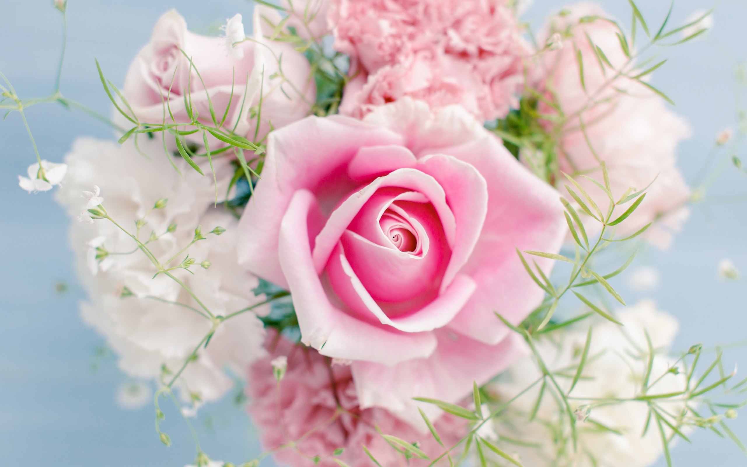 Wallpaper Pink Rose Beautiful Flowers 2560x1600 Hd Picture