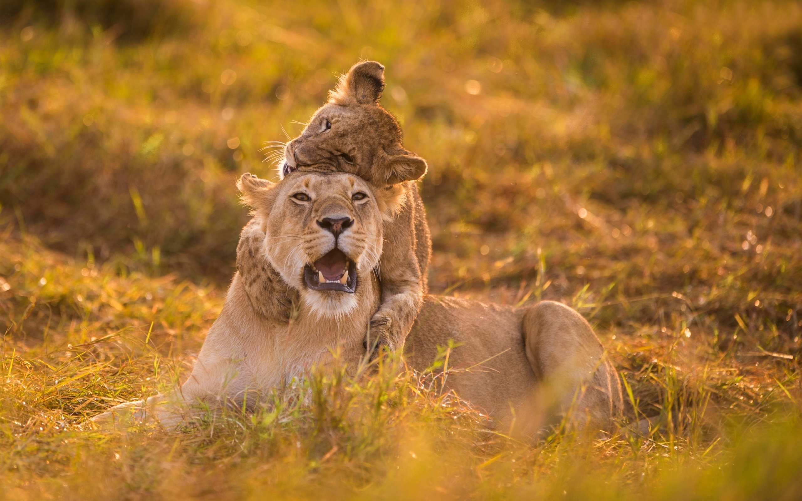 Львица с львятами скачать