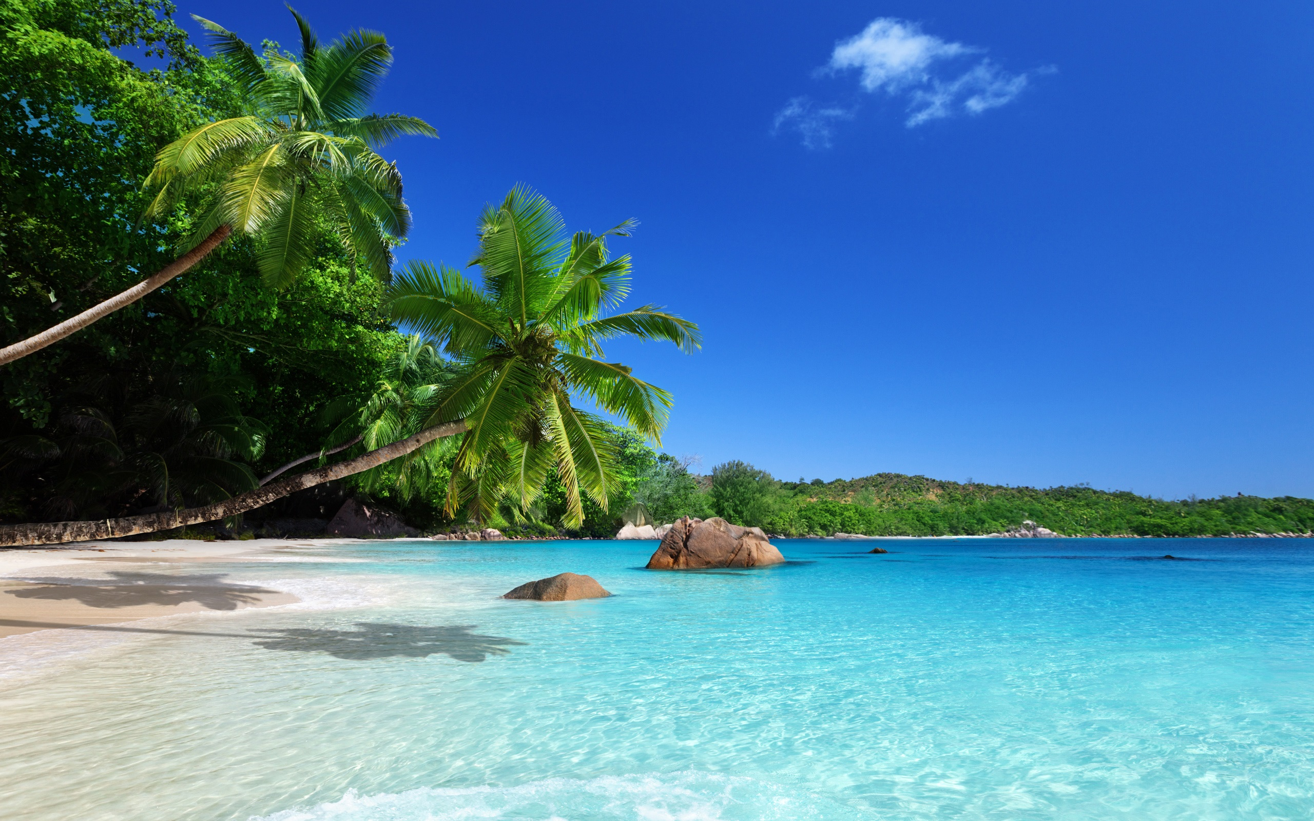 Tropical Paradise Beach Coast Sea Blue Emerald Ocean Palm: Wallpaper Tropical Paradise, Sunshine, Beach, Coast, Sea