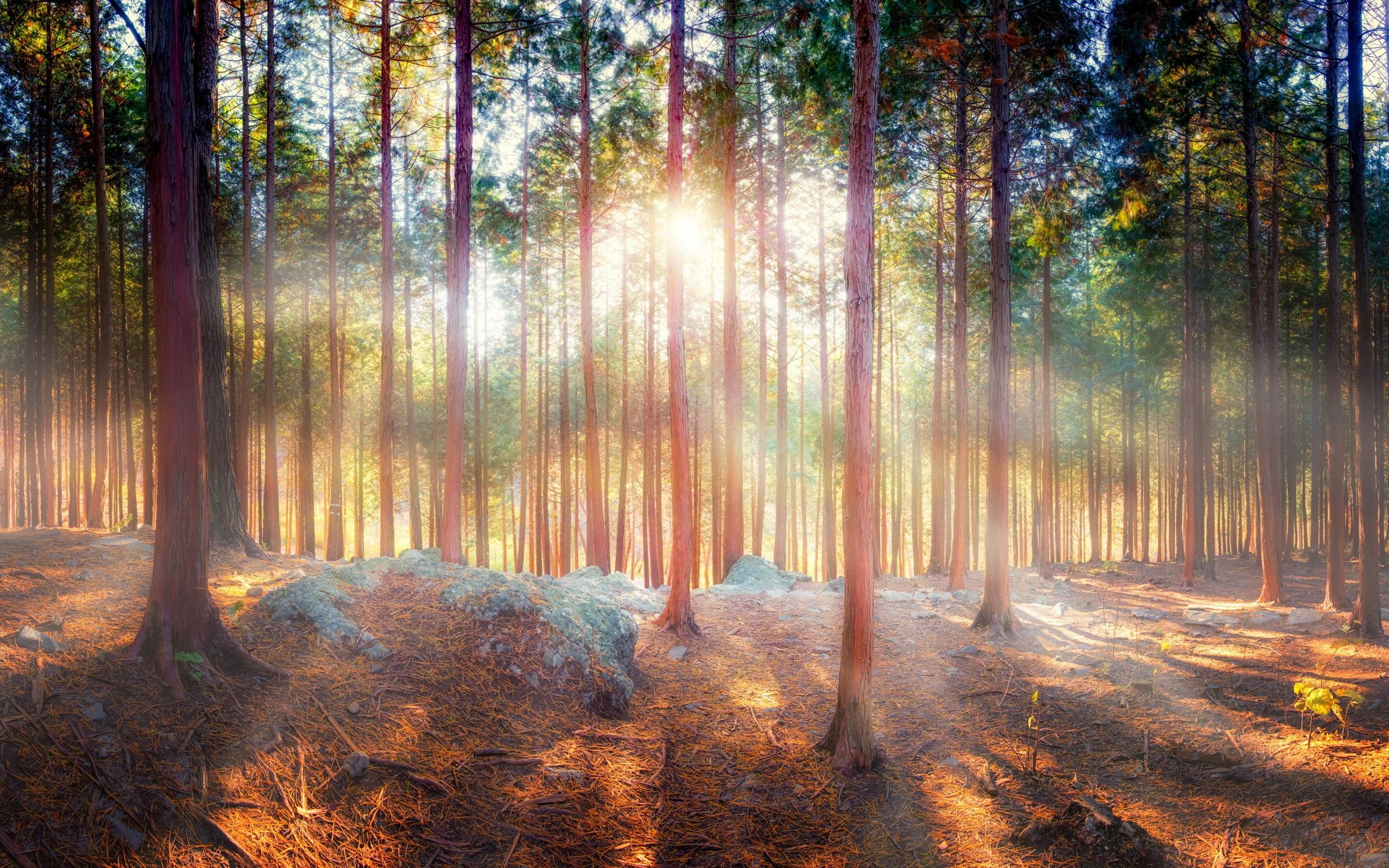 Лучи лес деревья  № 3847468 без смс