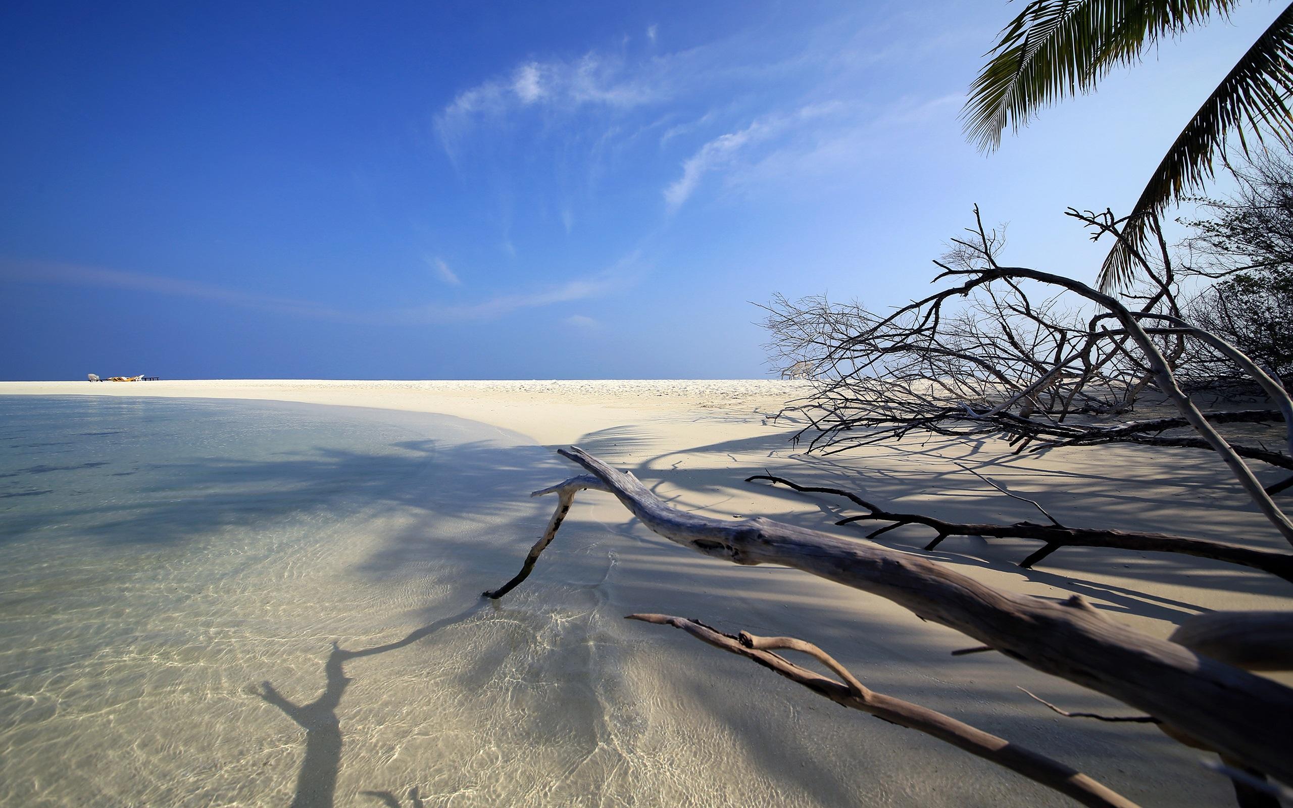 Embudu, Malediven, Meer, Strand, Sand, Zweige 2560x1600 HD