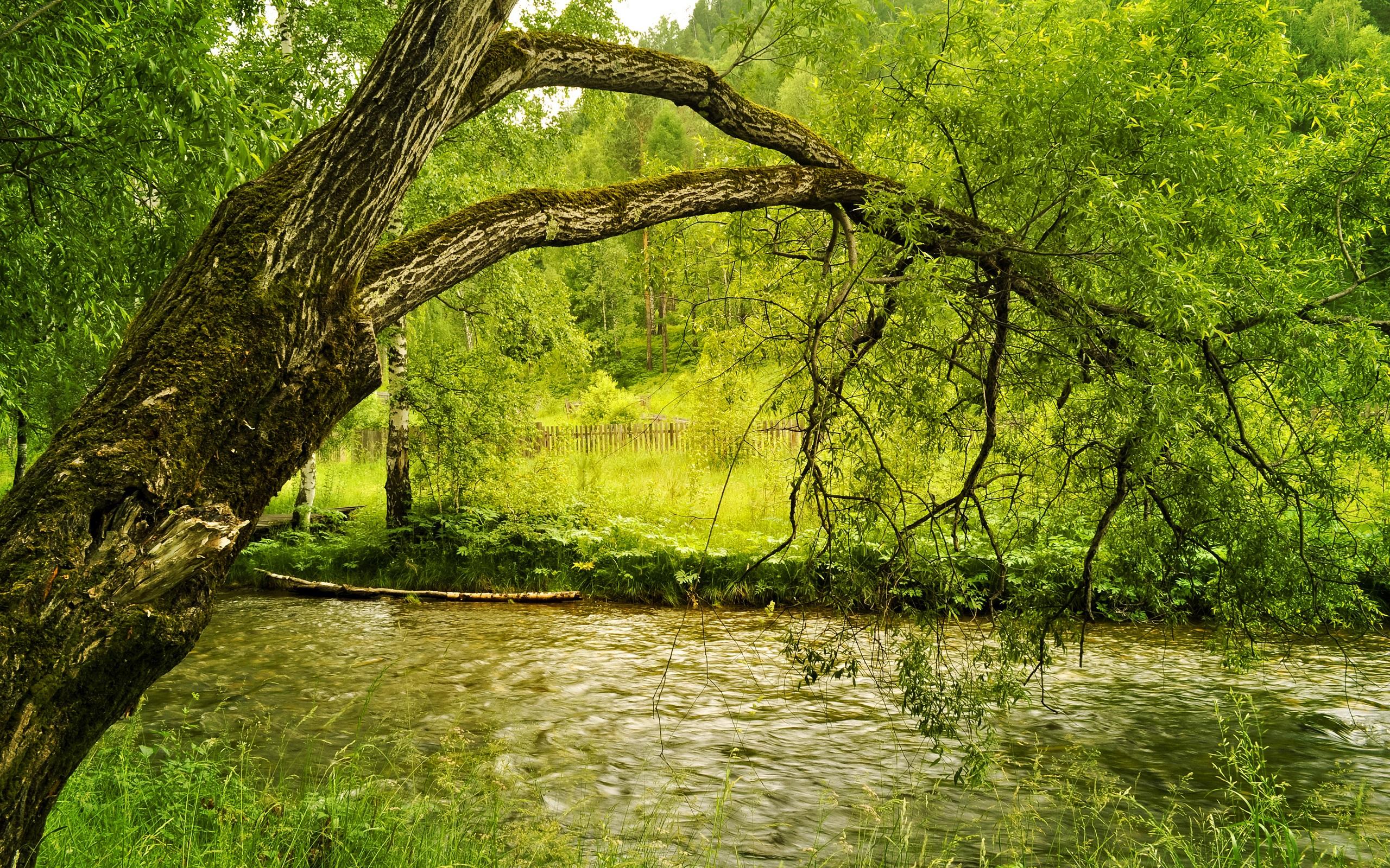 накренившееся над речкой дерево  № 1217030 бесплатно