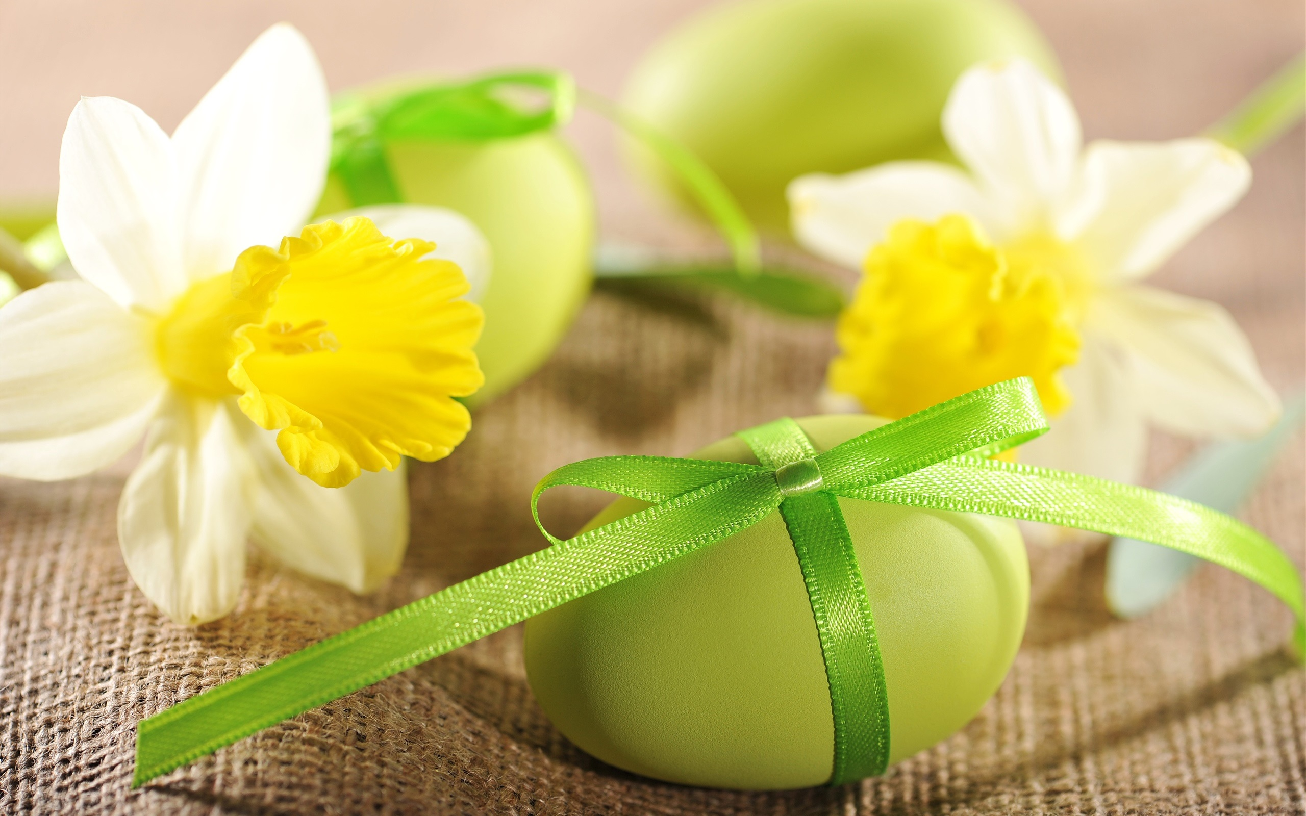 wallpaper easter eggs, flowers, daffodils 2560x1600 hd picture, image