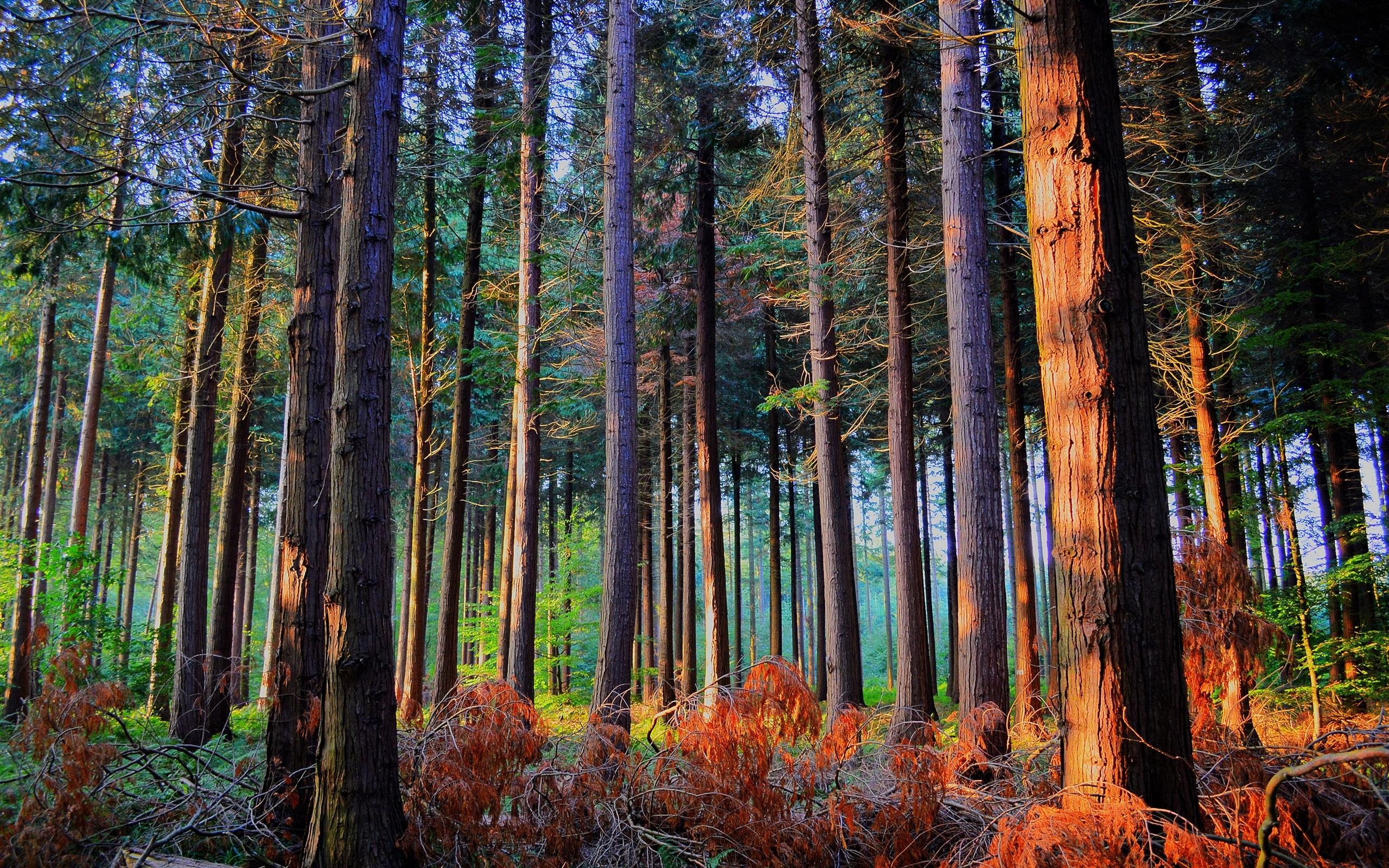 森林,林木,阳光,秋天