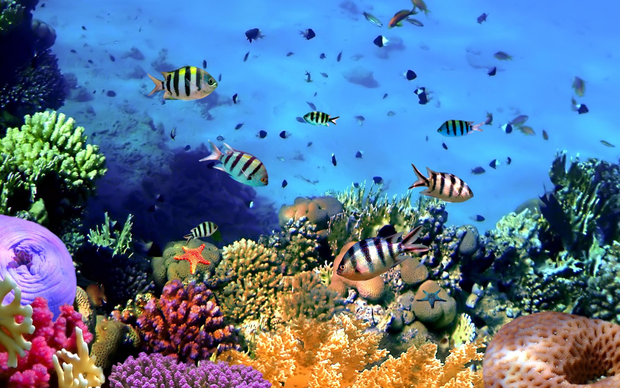 Marine Aquarium HD Wallpapers