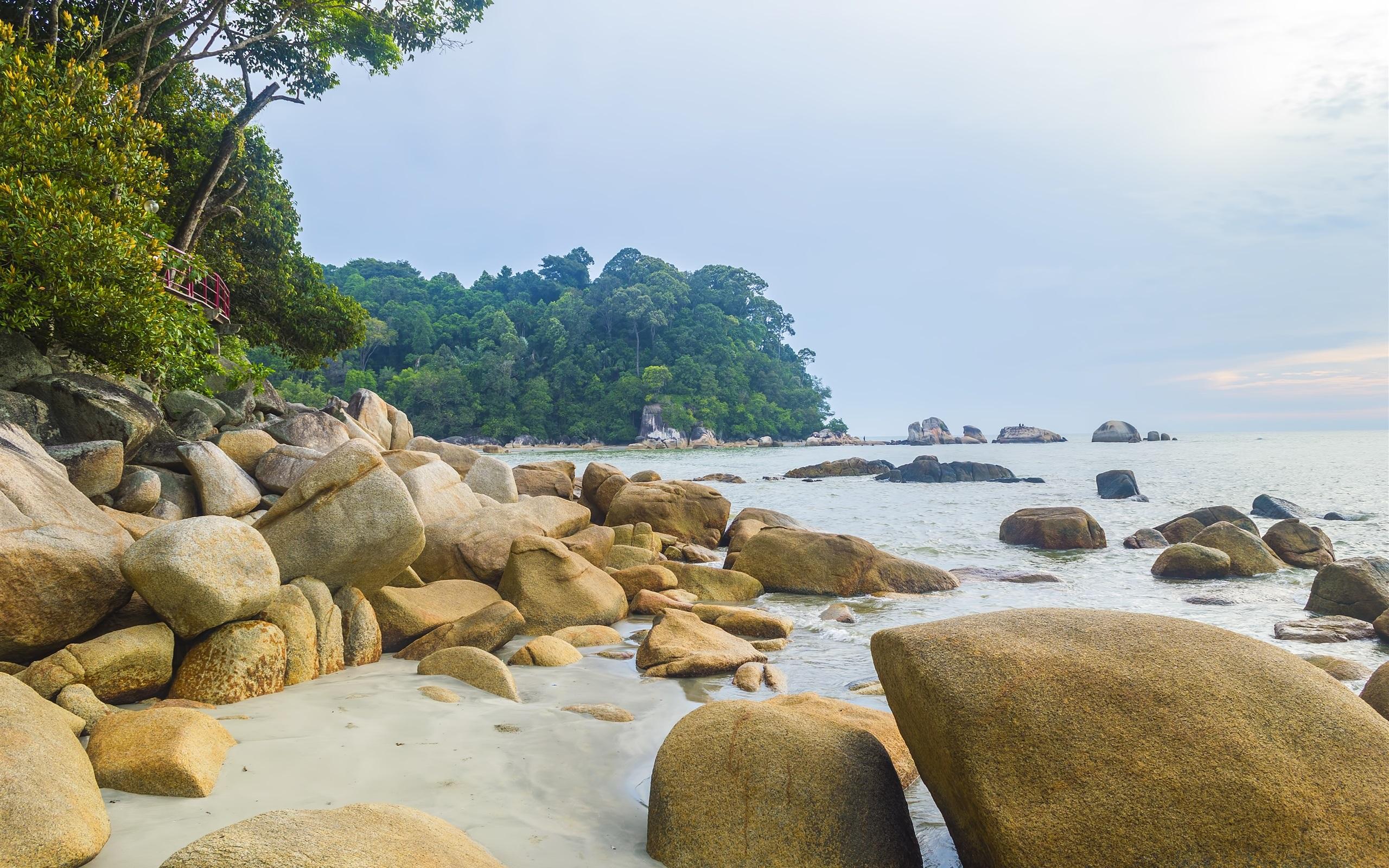 Wallpaper Sea Coast Beach Rocks Trees 2560x1600 Hd