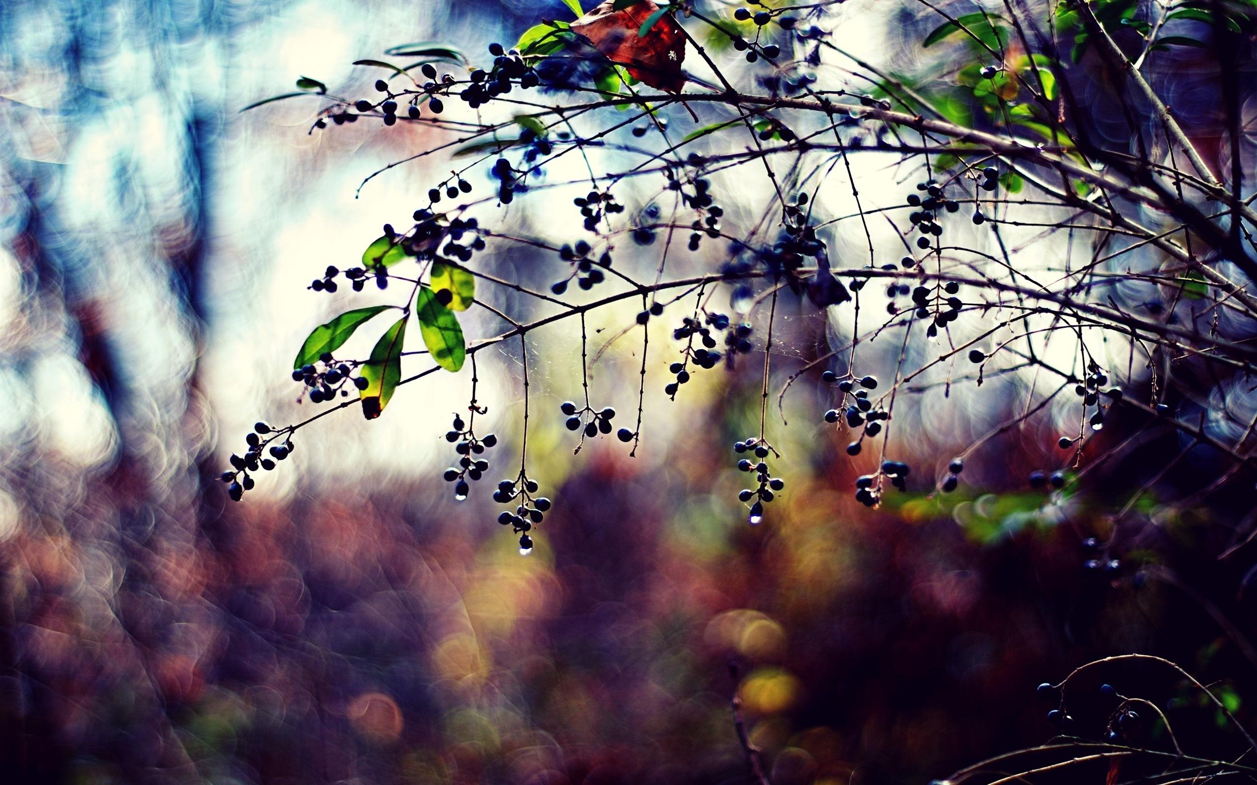 капли листки лес без смс