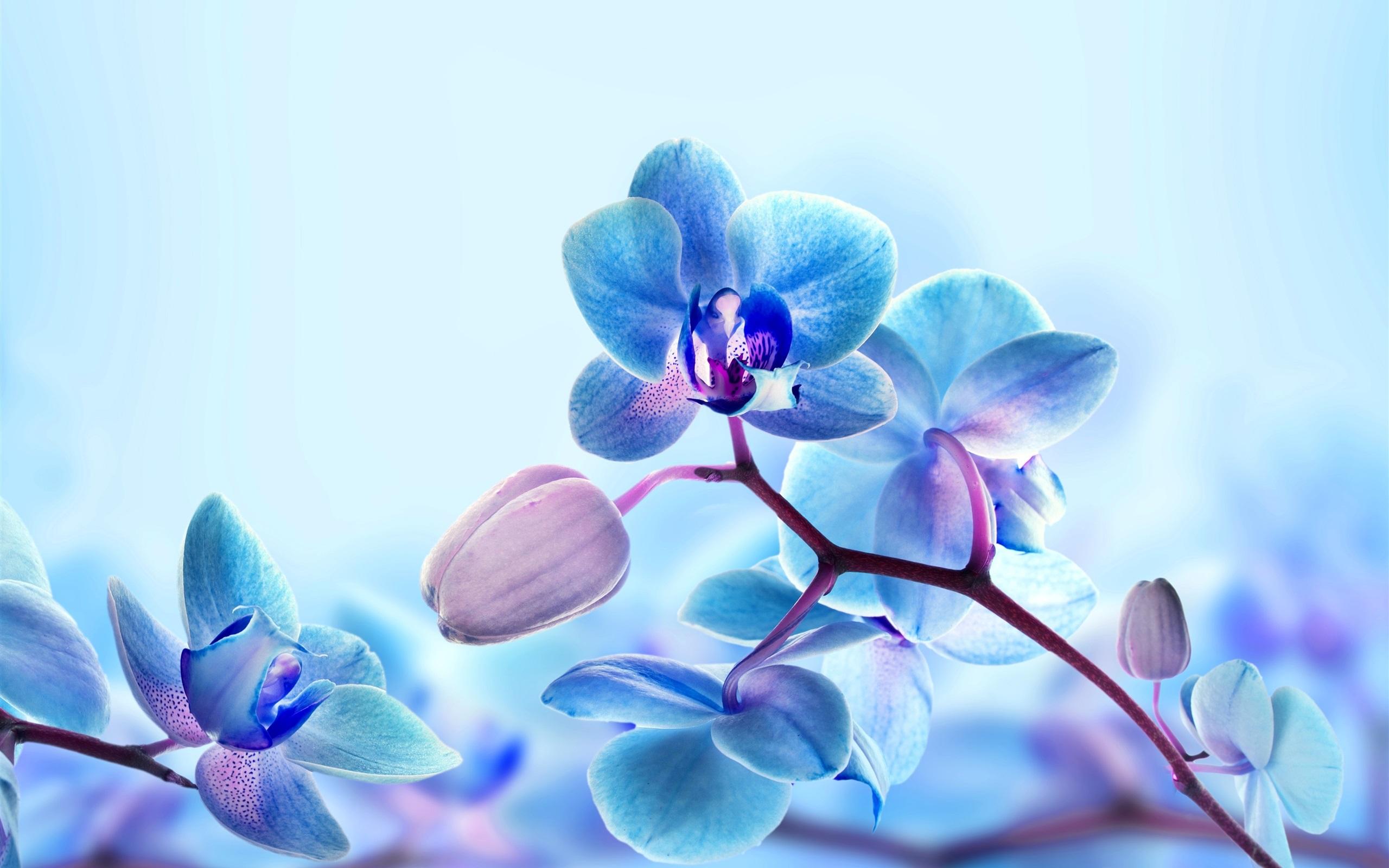 Fonds D Ecran Fleurs D Orchidee Petales De Couleur Bleue