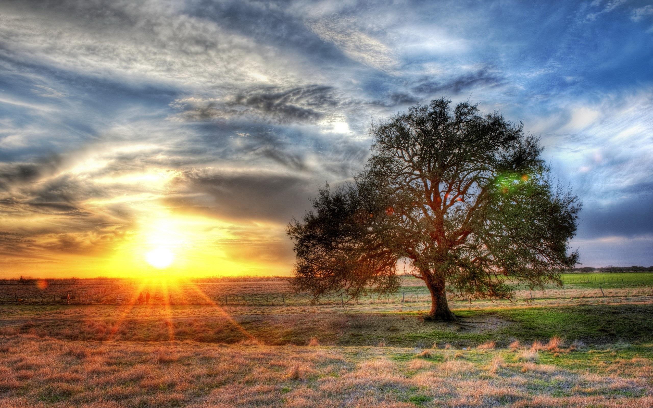 одинокое дерево небо закат без смс