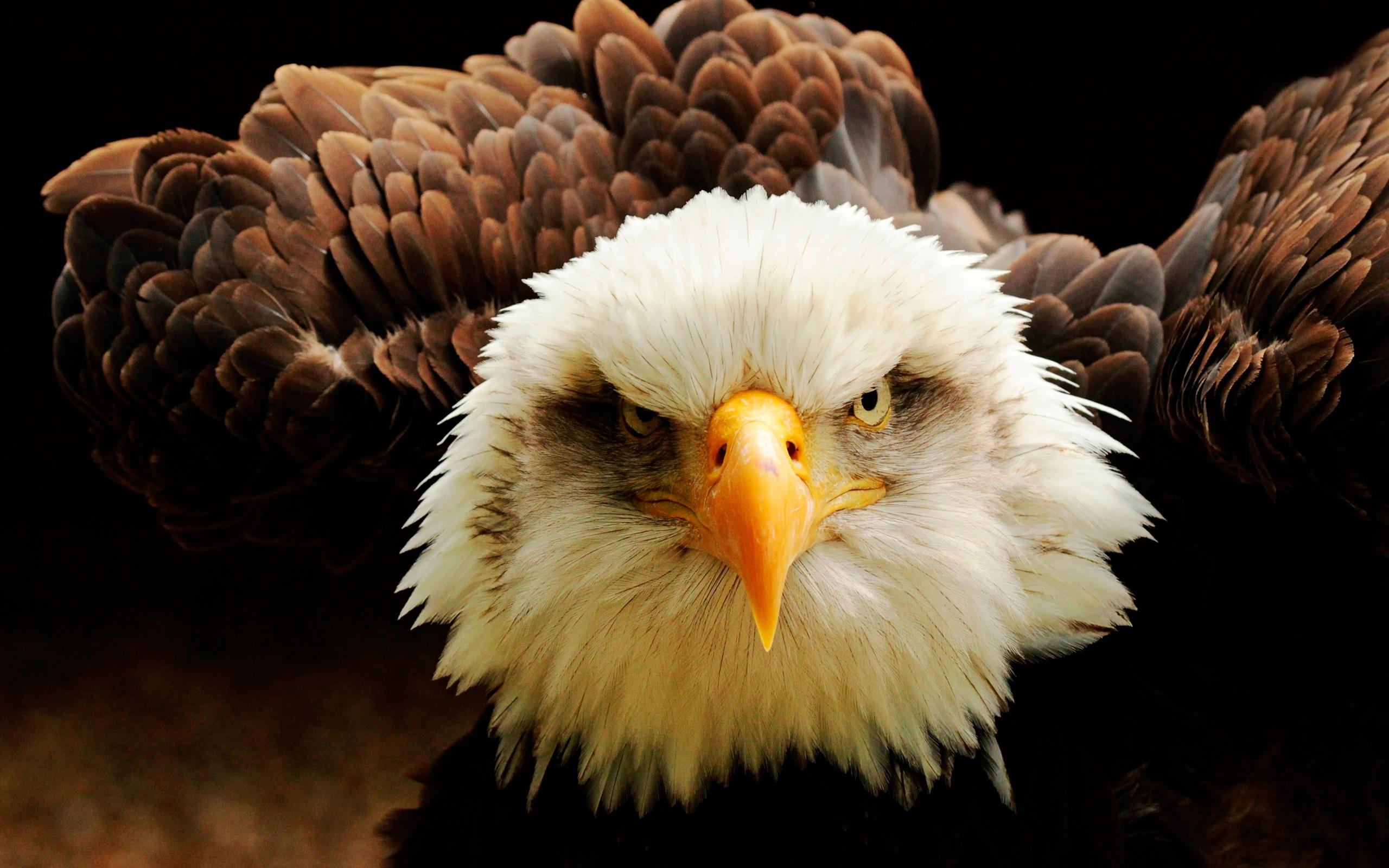 Фото орла на телефон свингеры любители