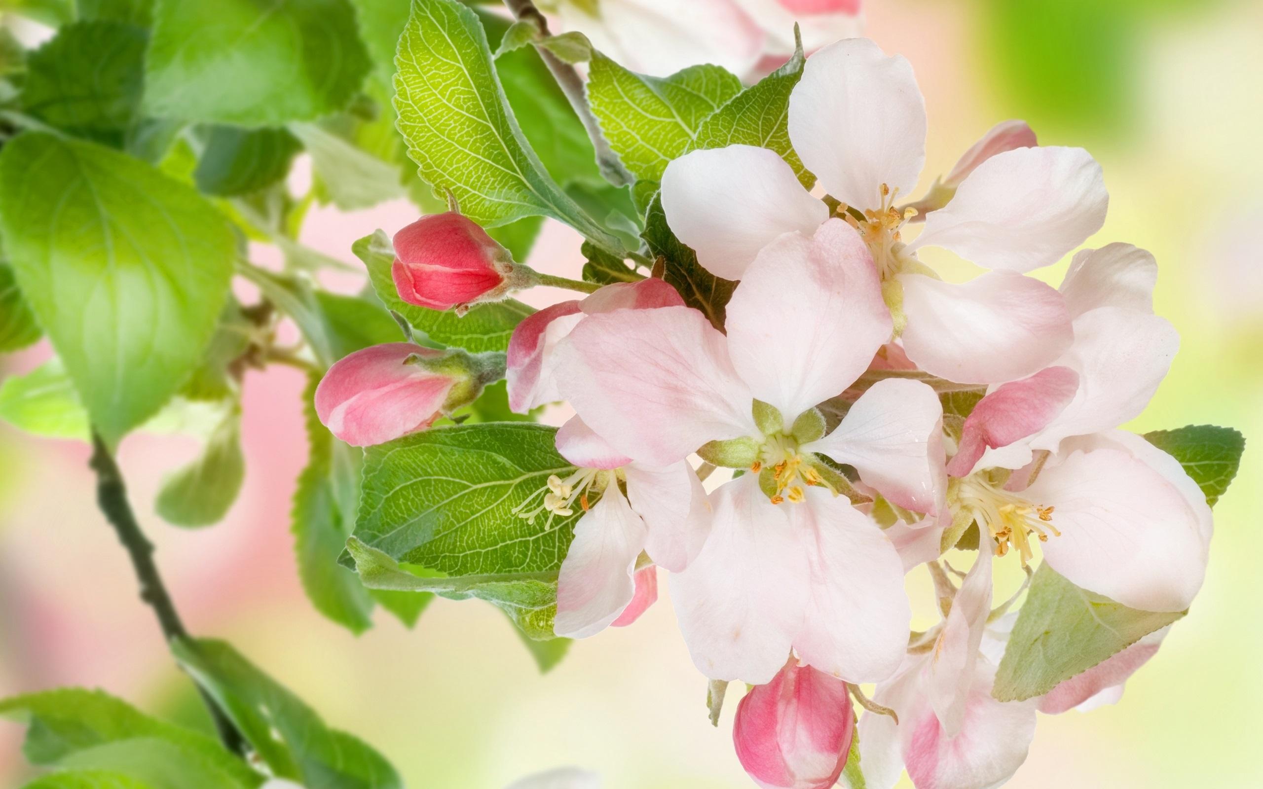 小蜗牛看苹果花故事_苹果花,树,树枝