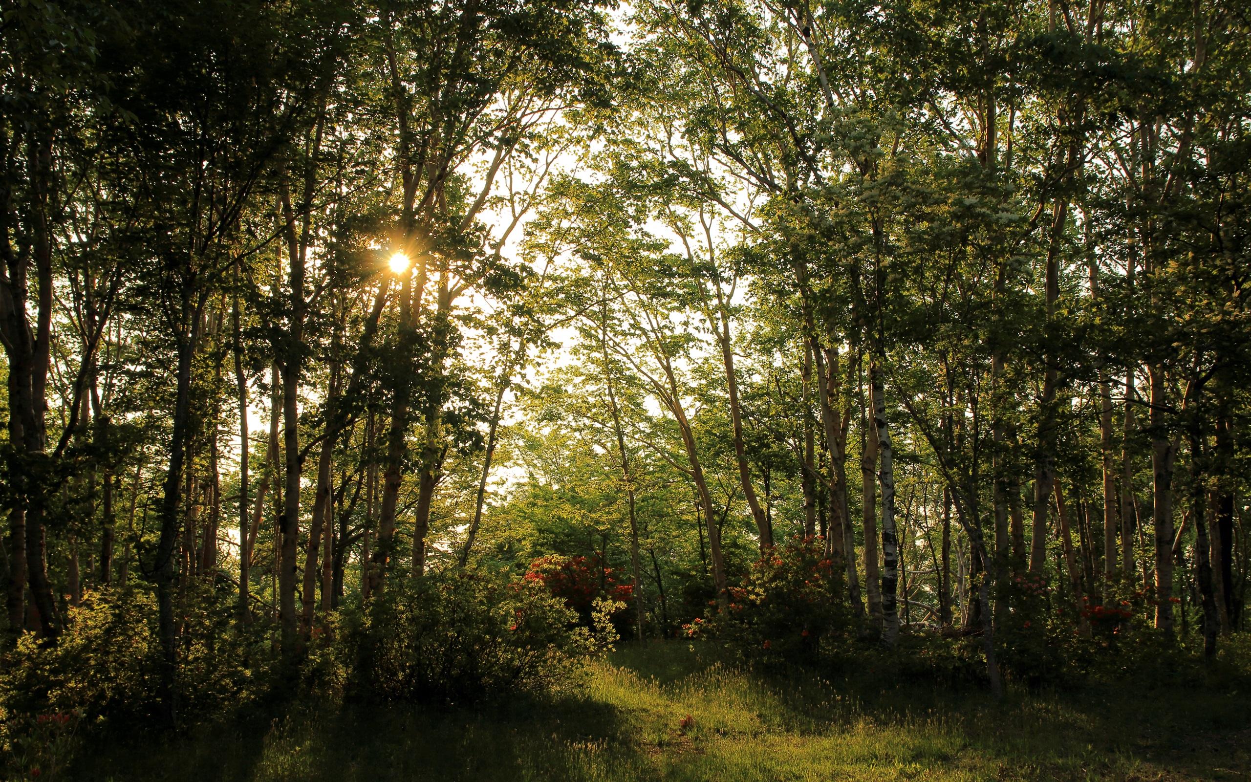 夏天,森林,树,太阳光芒,美丽的大自然 壁纸图片