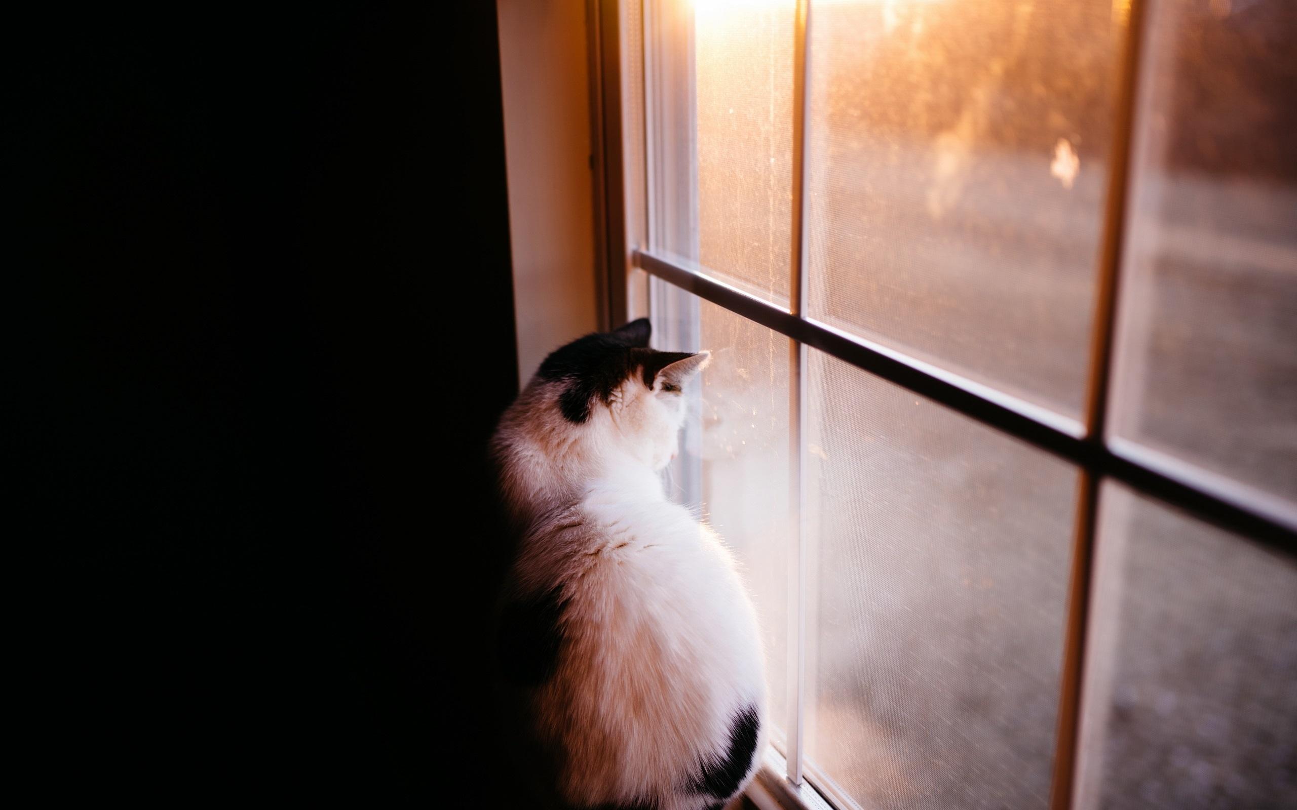гарантированно выиграть фото кошек смотрящих в окно пришел
