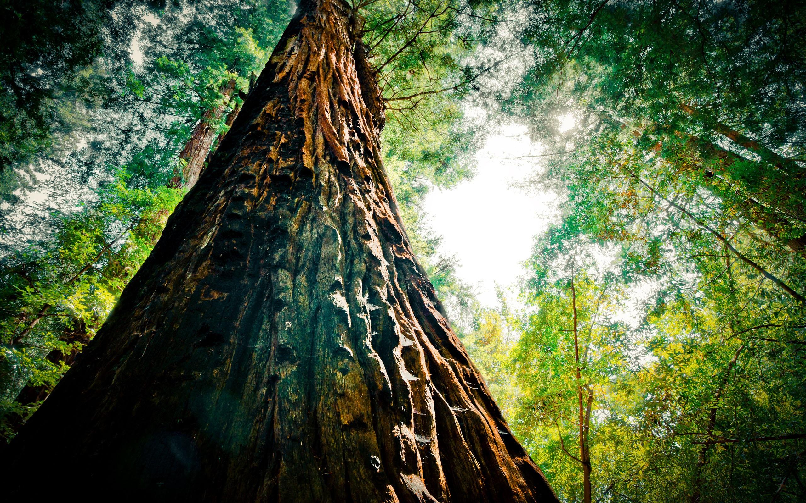 большое дерево  № 1647845 без смс
