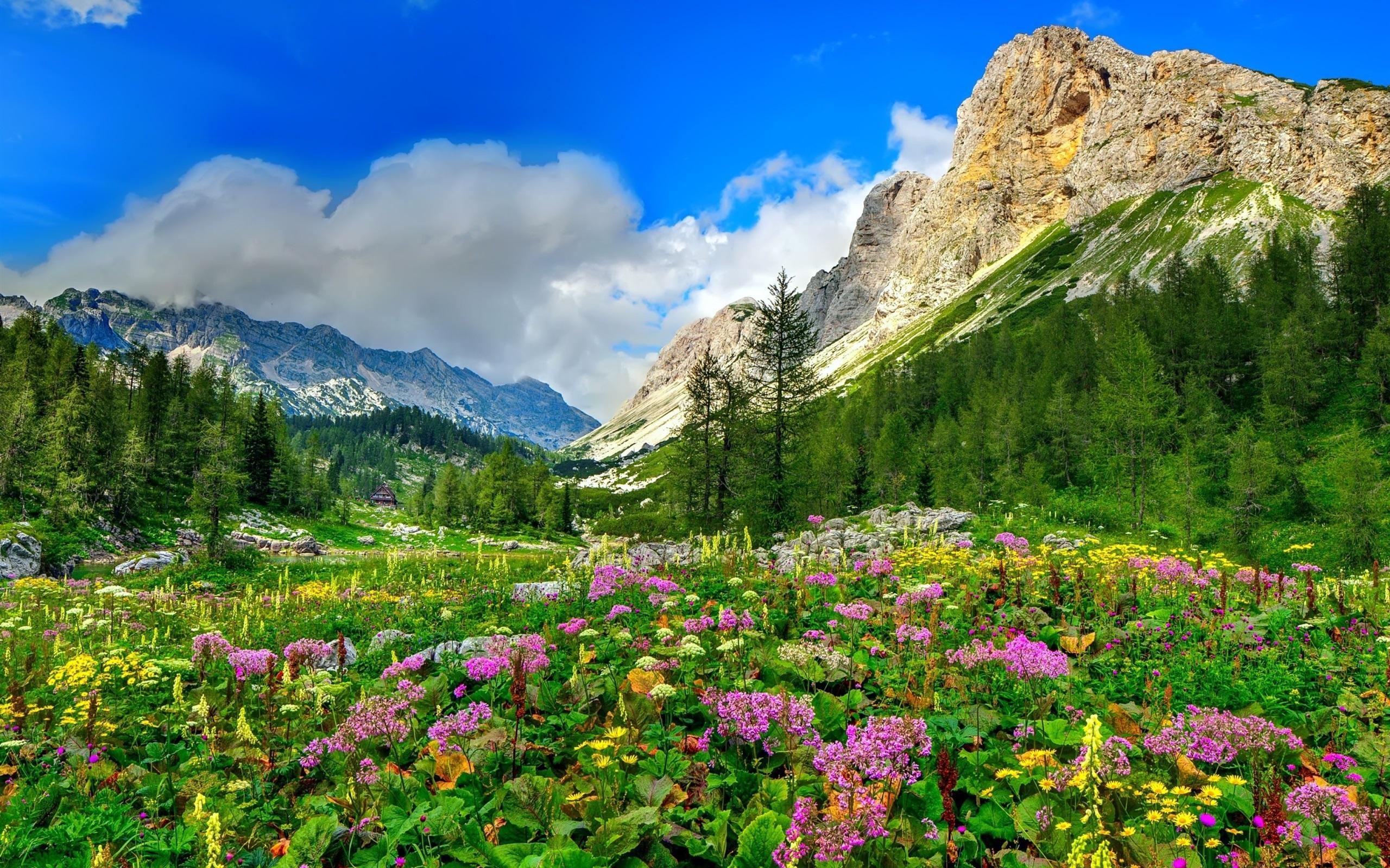 горы растительность русло без смс