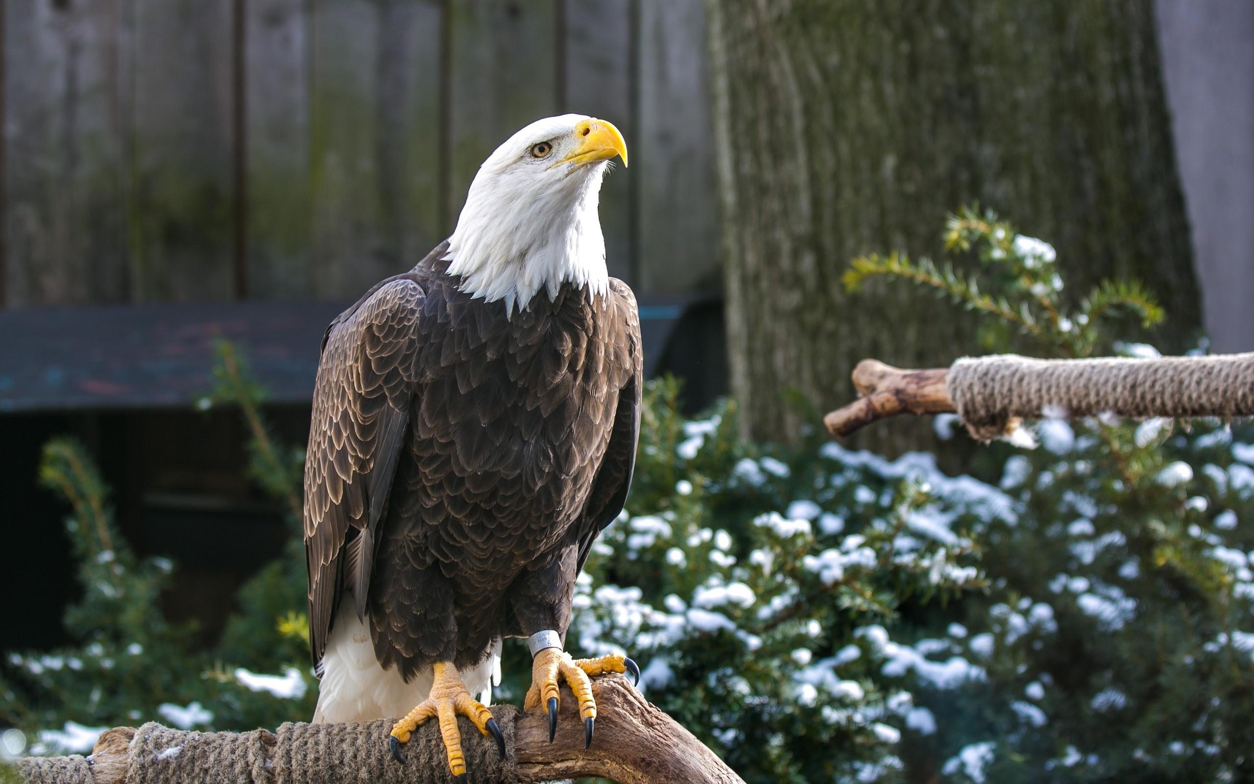 картинка орел сидит вовсе неважно, что