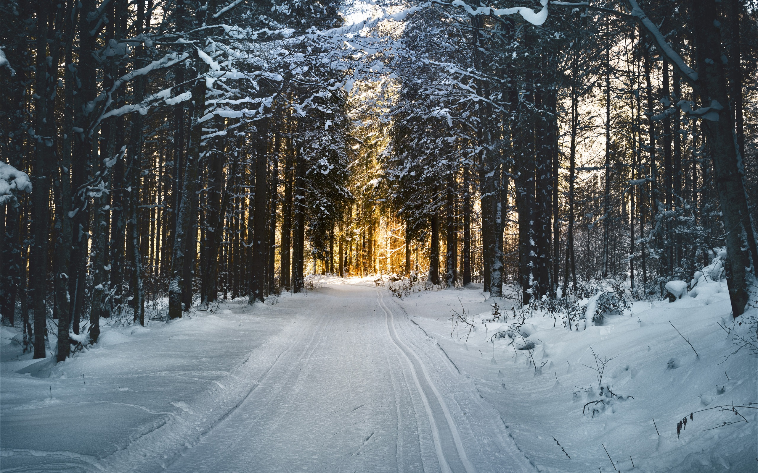 Лес в снегу загрузить