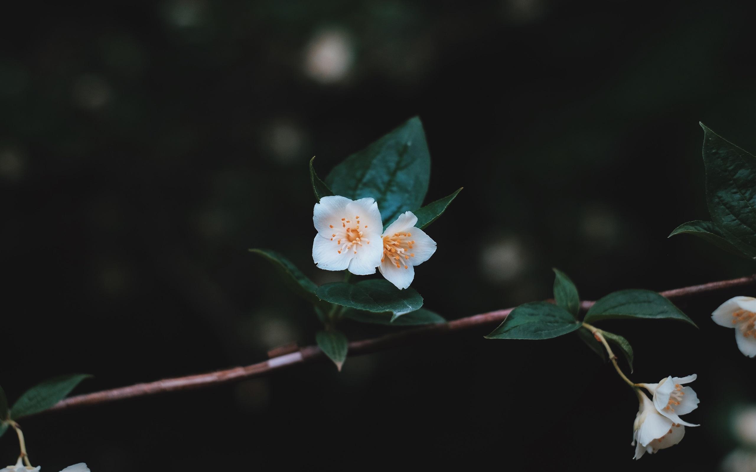Papeis De Parede Flores Brancas Arvore Galhos Folhas Fundo