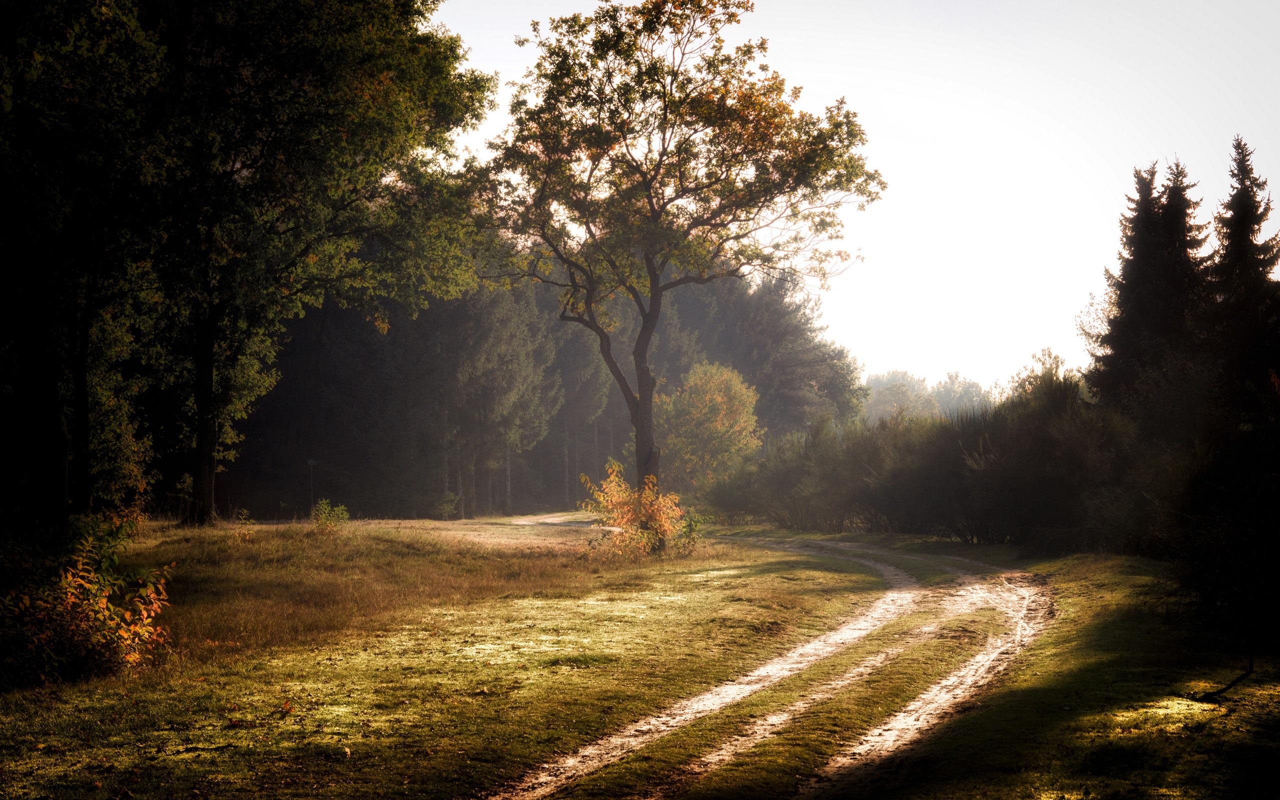 Fondos De Pantalla Verano, Bosque, Camino, árboles