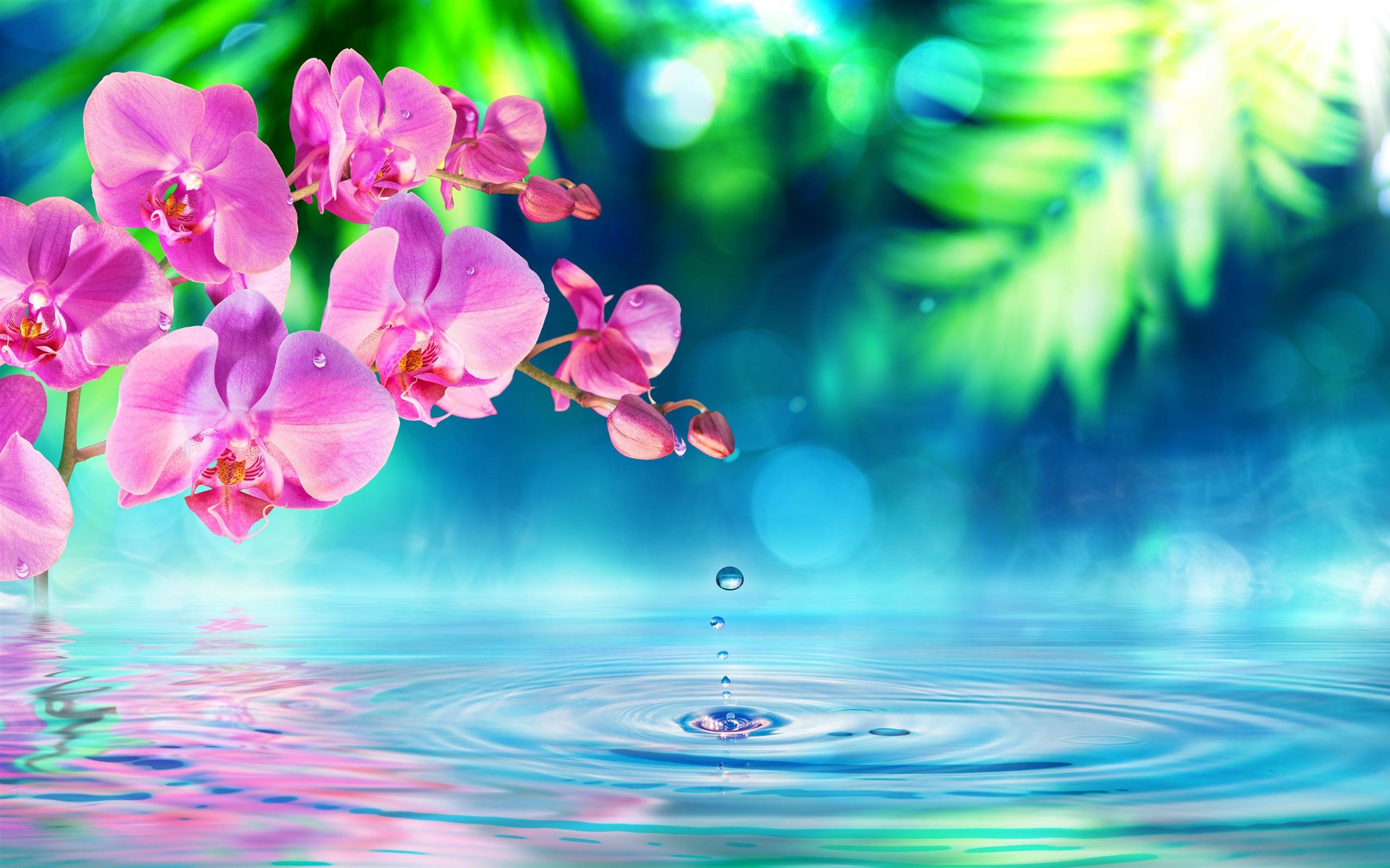 Fondos De Pantalla Iphone 7 Plus: Phalaenopsis, Flores Rosadas, Ondas De Agua, Gotas