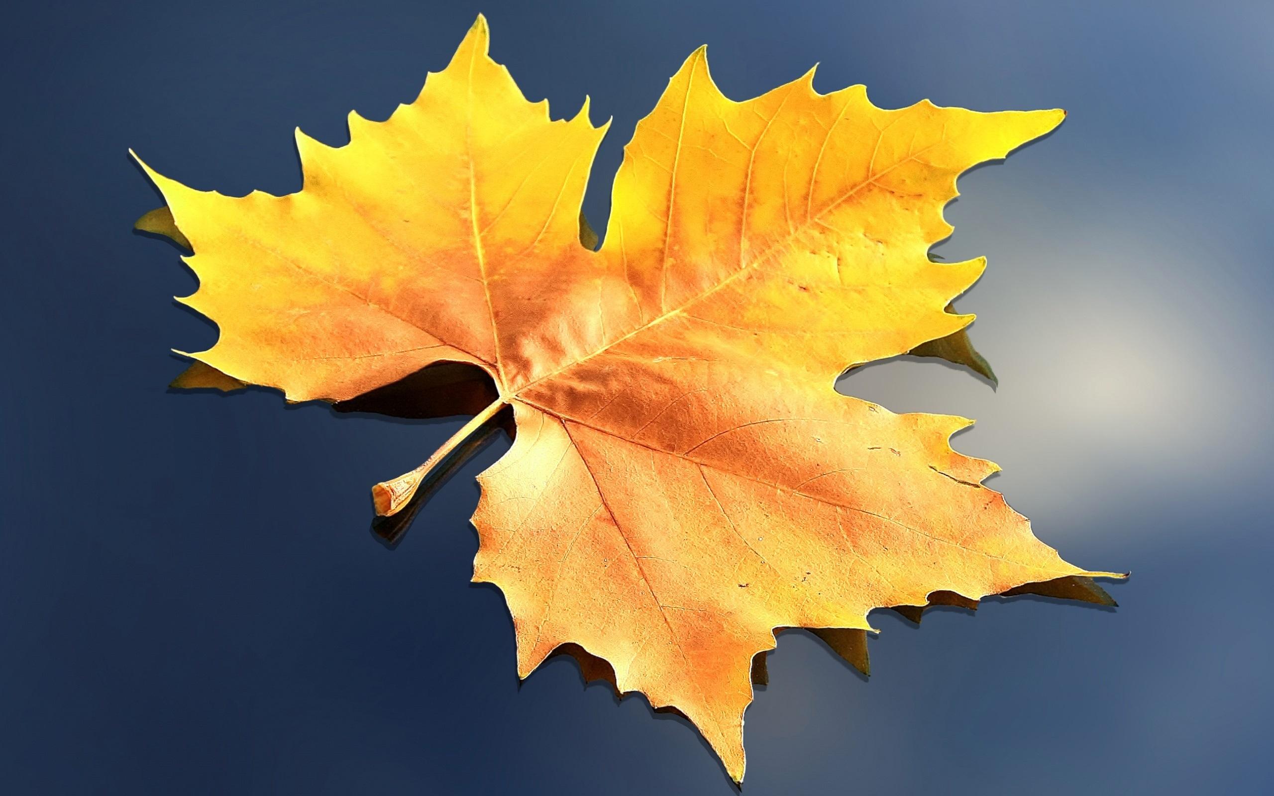 Картинки желтых листьев, открытка