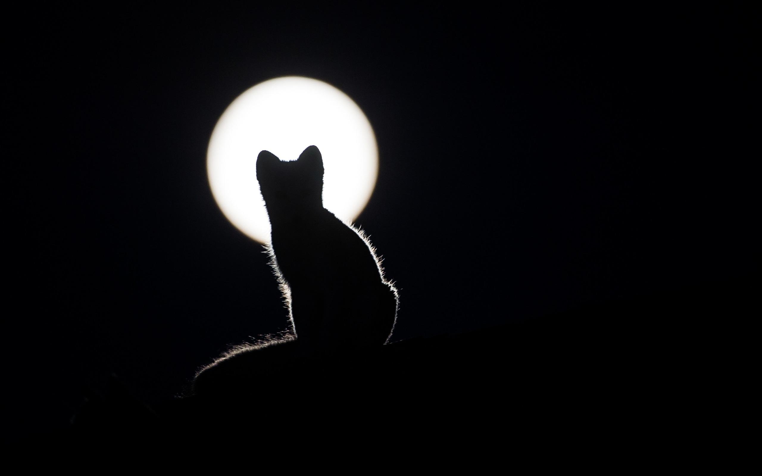 Katzenschattenbild Nacht Mond Dunkelheit 2880x1800 Hd