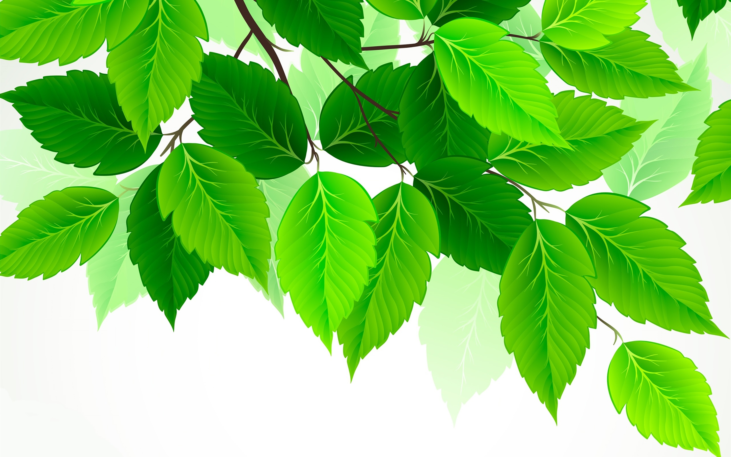 красного рисунок зеленые листья на белом фоне она может быть