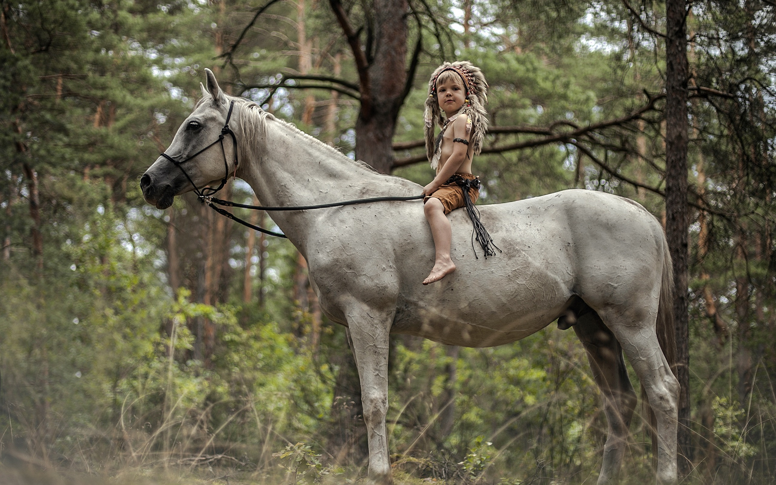 Wallpaper Little Boy Sit On White Horse 2560x1600 Hd Picture Image