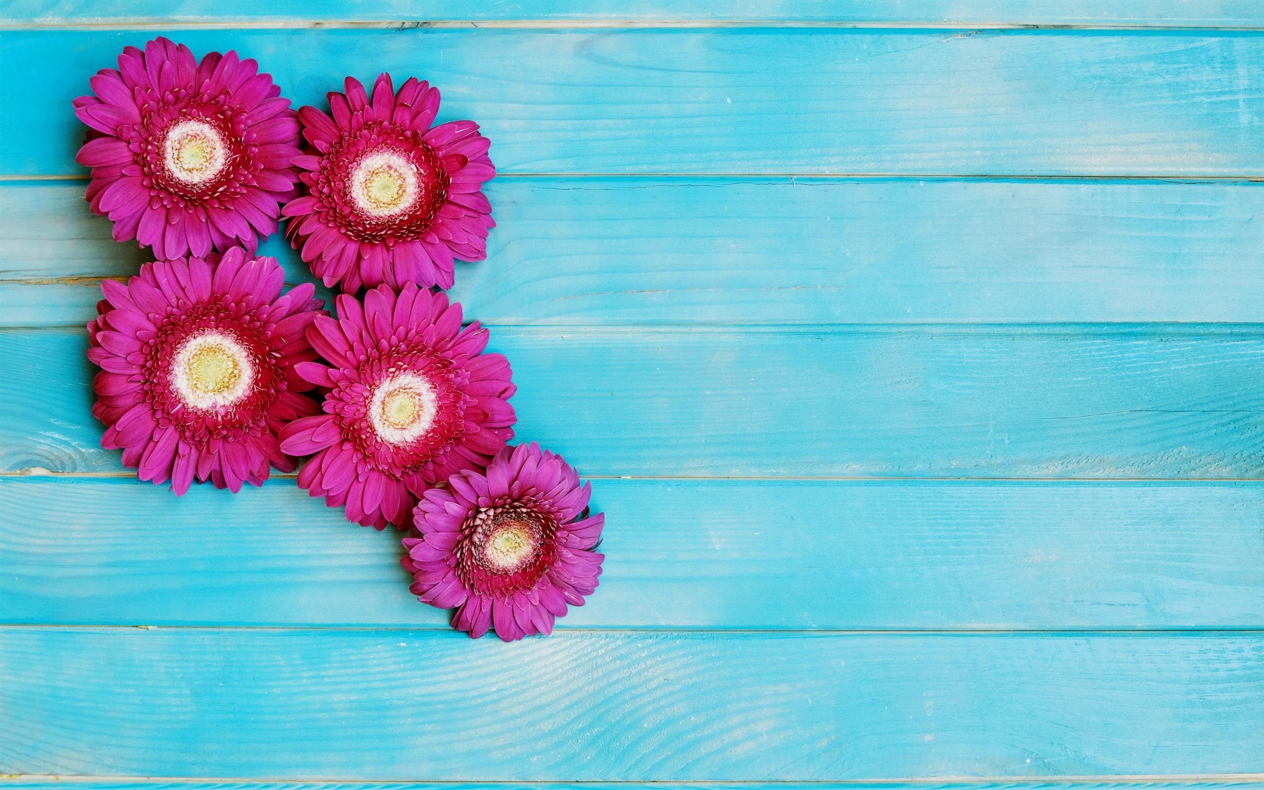 Fondos De Pantalla Rosa Rosa Flores Fondo De Madera: Fondos De Pantalla Flores Rosadas Del Gerbera, Fondo De