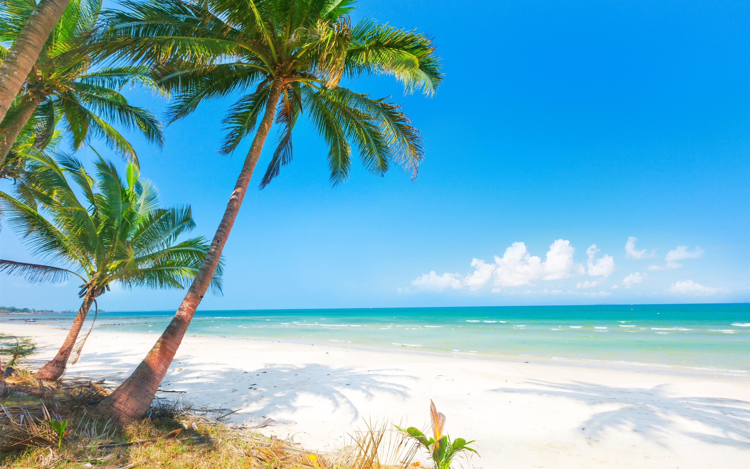 sommer, strand, palmen, meer 3840x2160 uhd 4k hintergrundbilder, hd