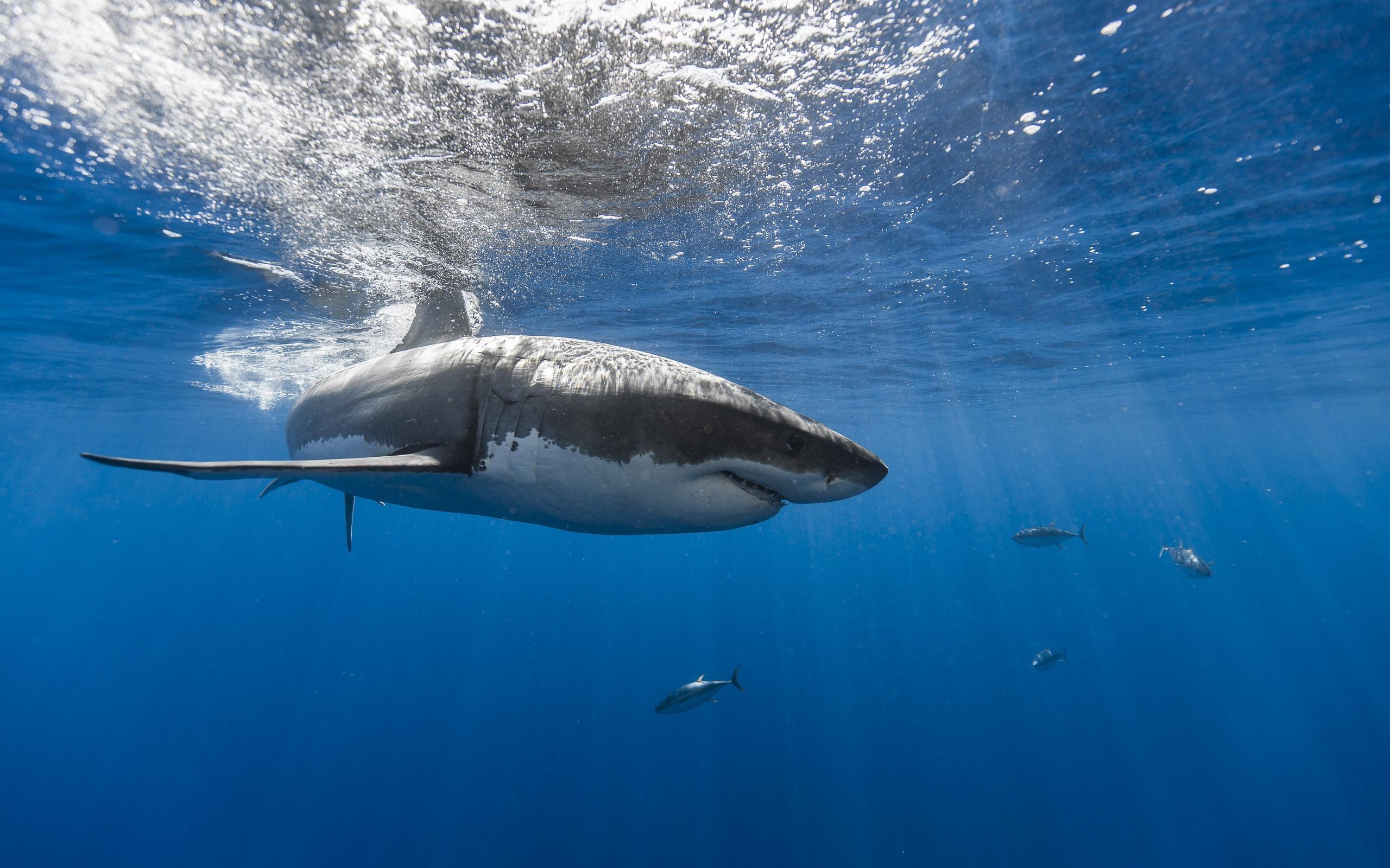 Fonds Décran Requin Mer Sous Marin Poisson 750x1334