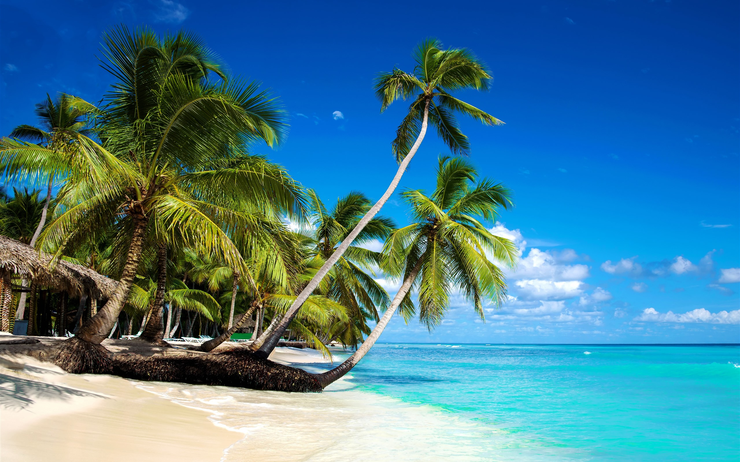10 Most Popular Beautiful Beach Backgrounds Palm Trees: Wallpaper Beautiful Beach, Palm Trees, Sea, Blue Sky