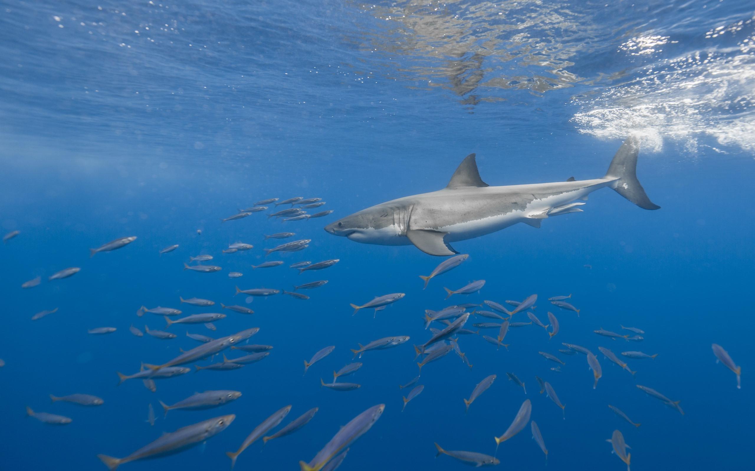 Fonds Décran Animaux De Mer Requin Poisson Sous Marin