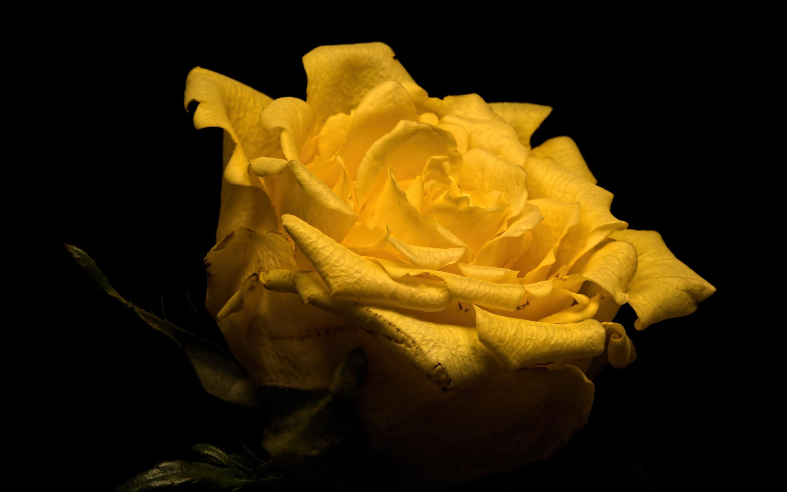 Ссср плакаты, картинки желтая роза на черном фоне