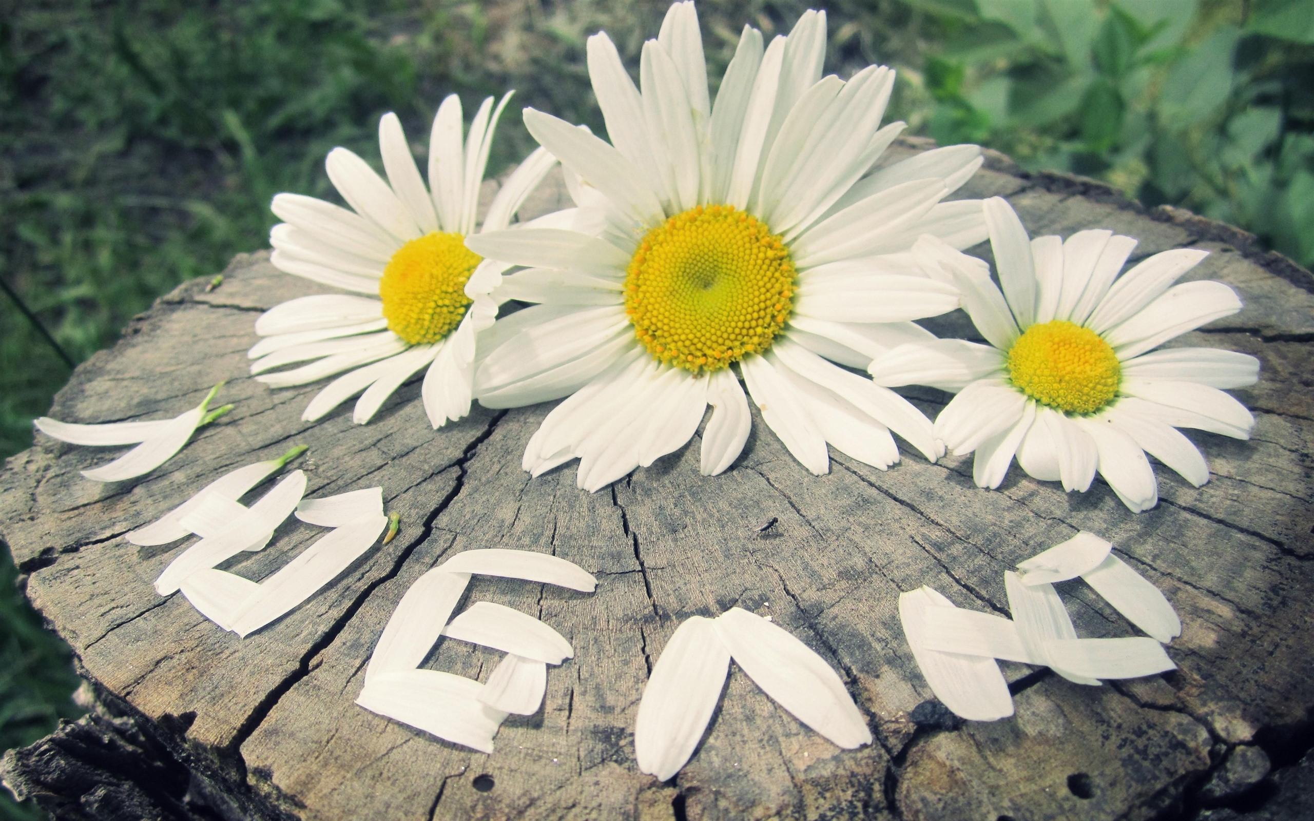 цветы картинки с диалогами афоризмы есенина откроют