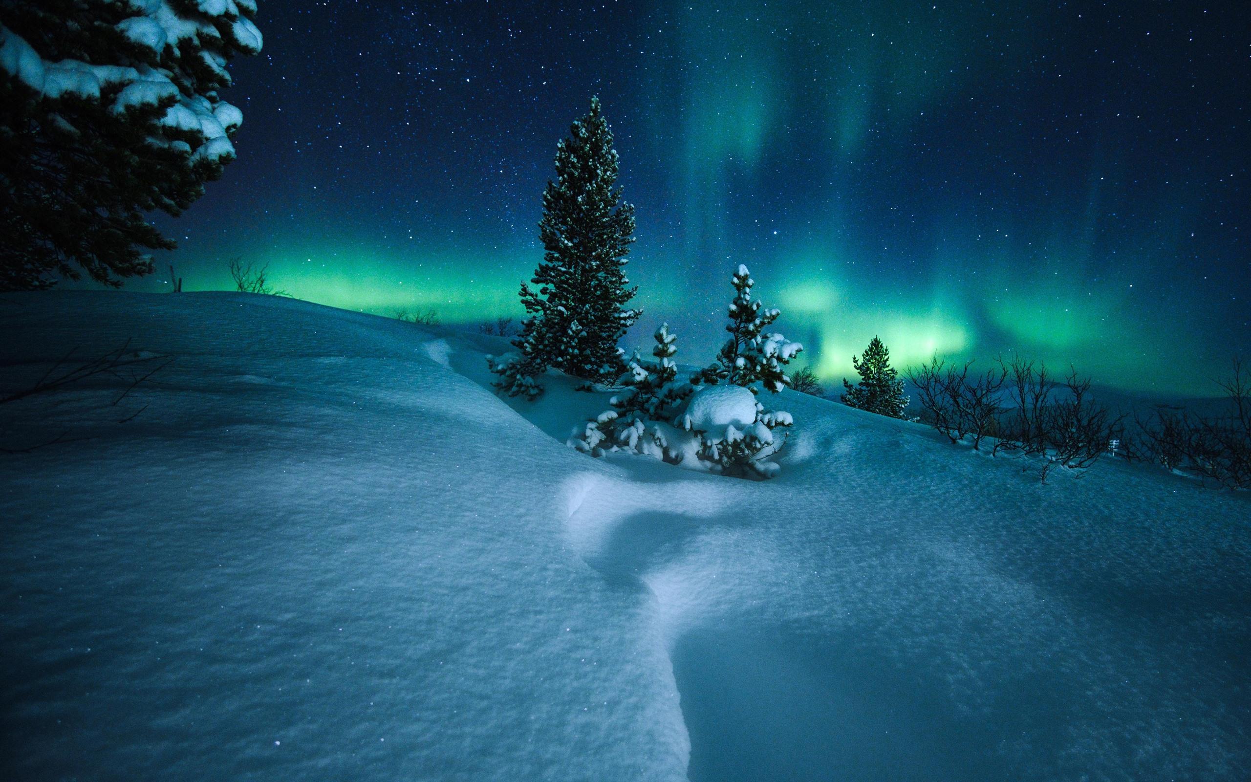 壁紙 オーロラ ノルウェー 木 雪 星空 夜 2880x1800 Hd 無料の