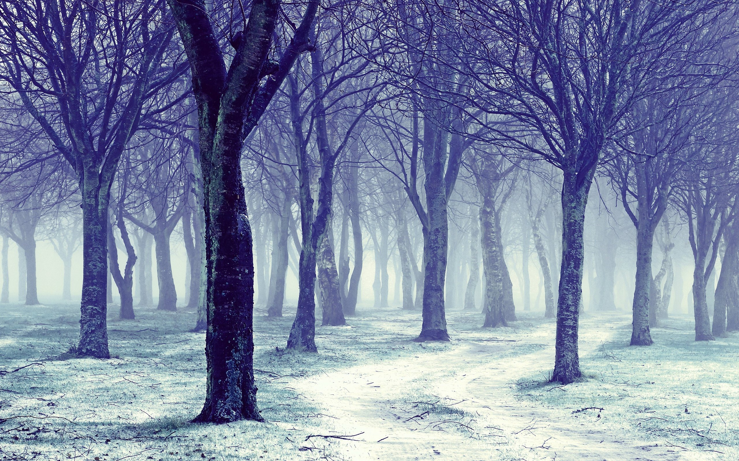 Wallpaper Trees Snow Fog Winter Morning 2560x1600 Hd