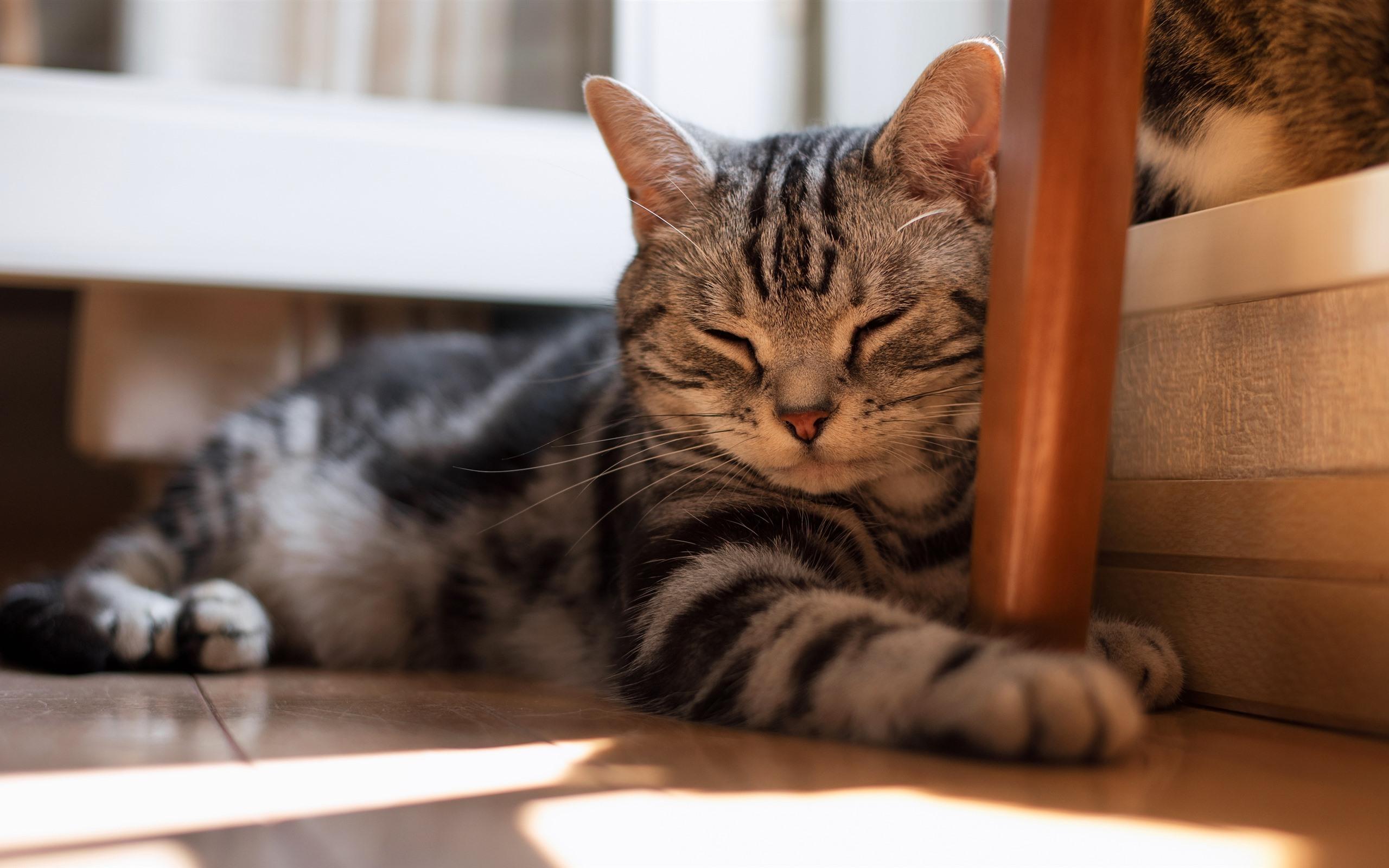 . Wallpaper Cat sleeping  room  floor 3840x2160 UHD 4K Picture  Image