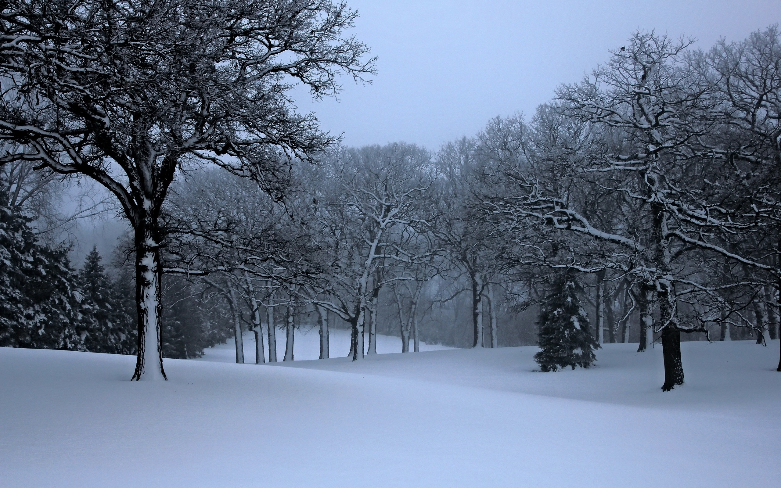 Wallpaper Winter Trees Snow Nature Scenery 2560x1600 Hd