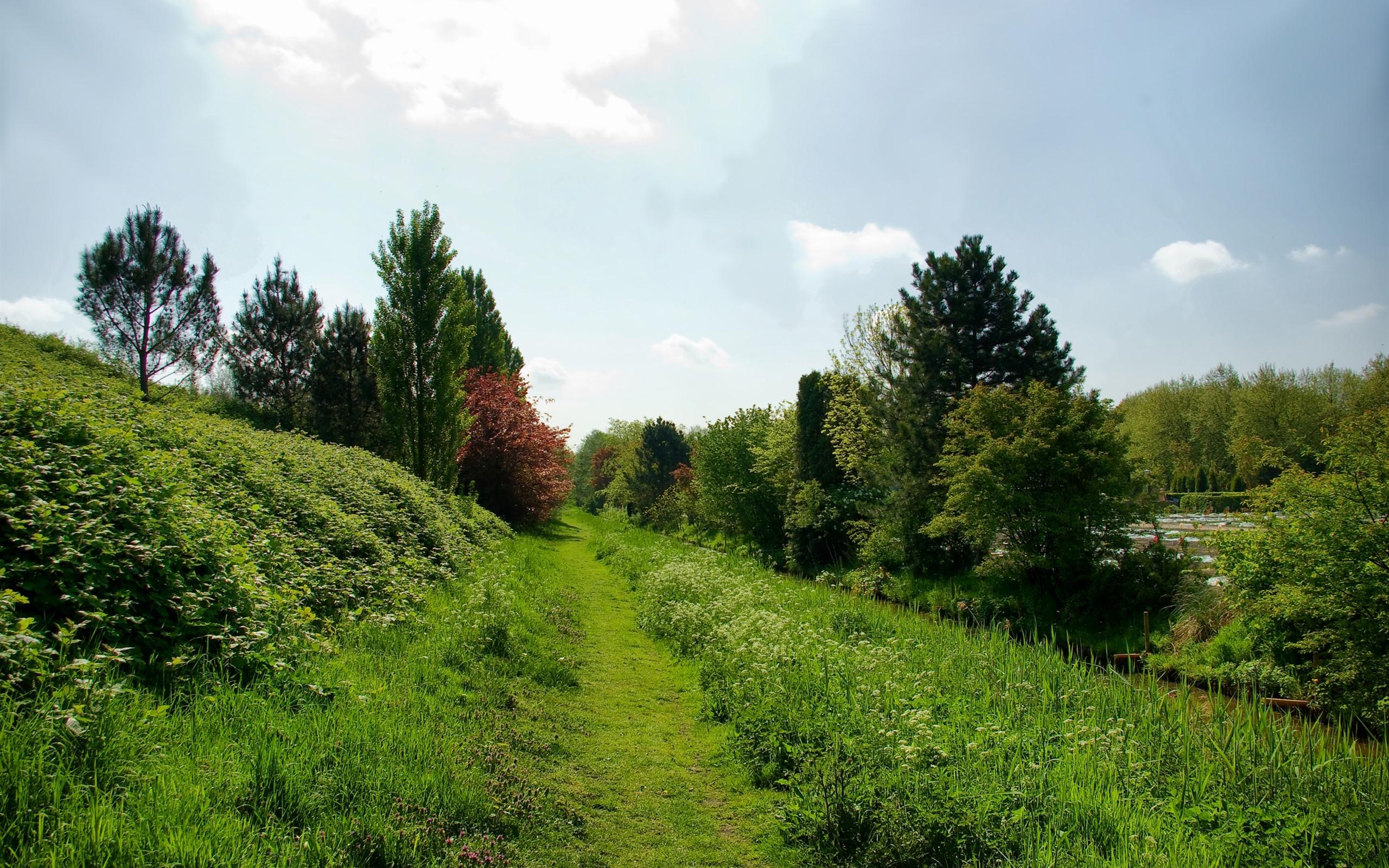壁紙 田舎 緑の草 茂み 木 2560x1600 Hd 無料のデスクトップの背景